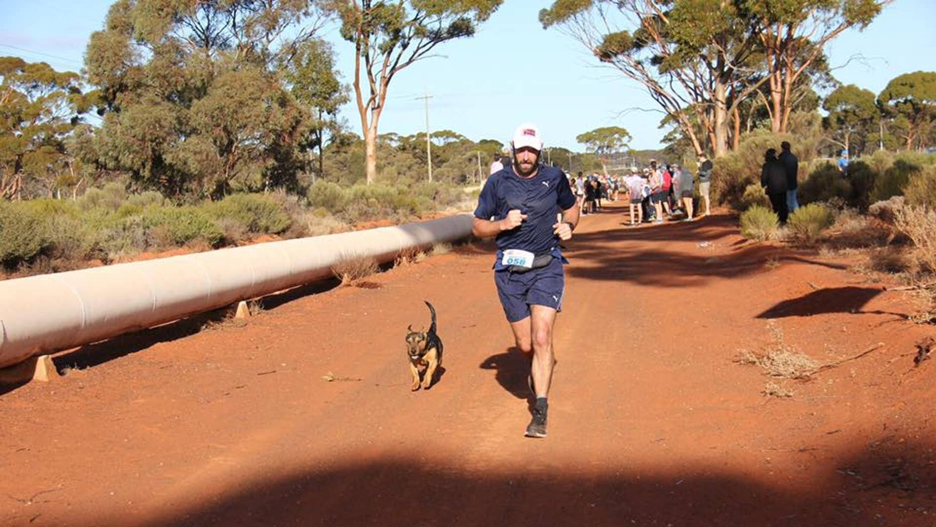 A stray dog named Stormy recently decided to jump in on a half-marathon in Australia, earning himself a medal.