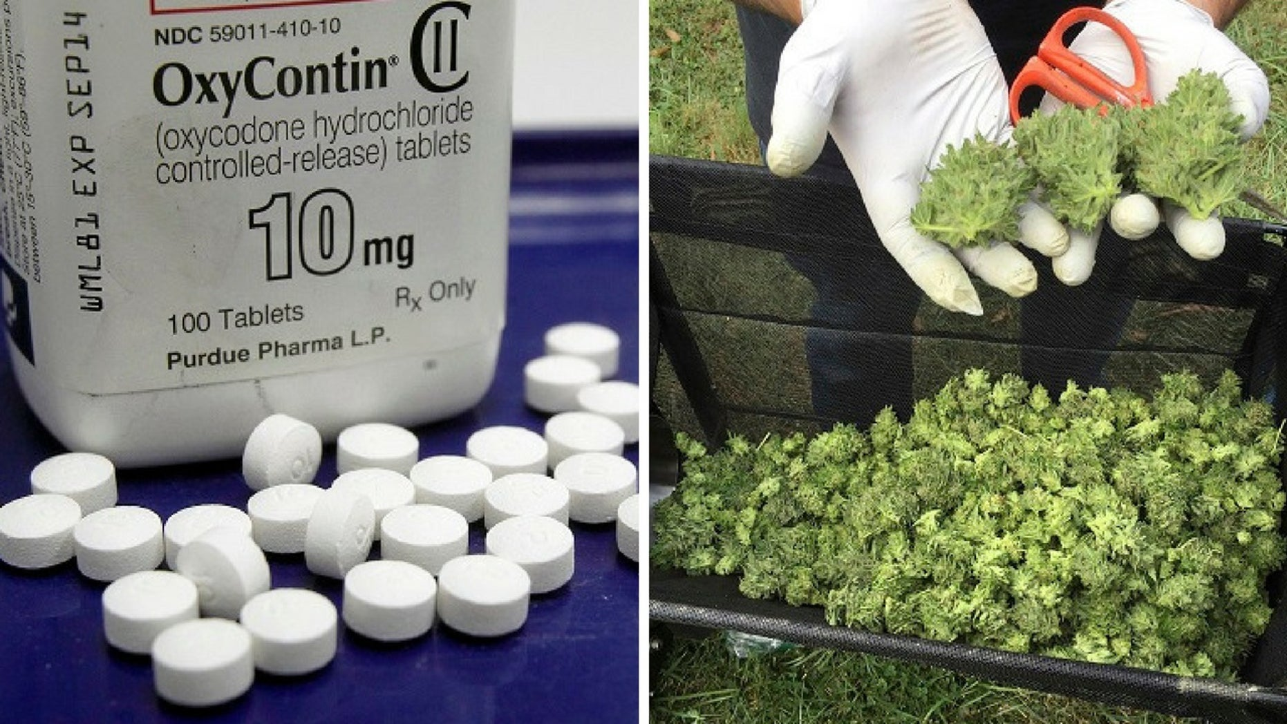 A report found there was an increase in fatal accidents involving marijuana and opioids in the past decade.