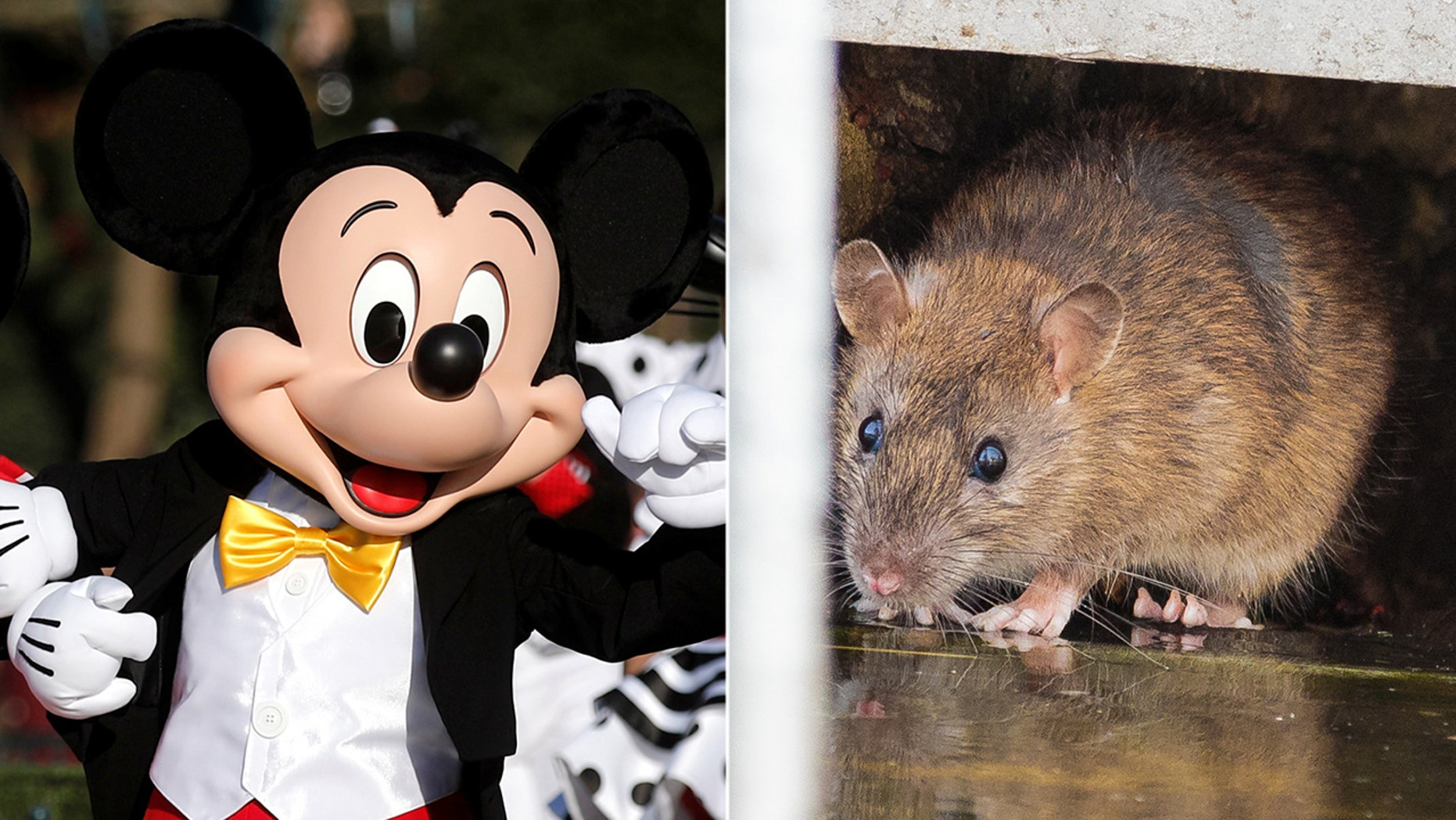 A former guest at Walt Disney World has filed a lawsuit against Disney Parks over the April 2014 incident.