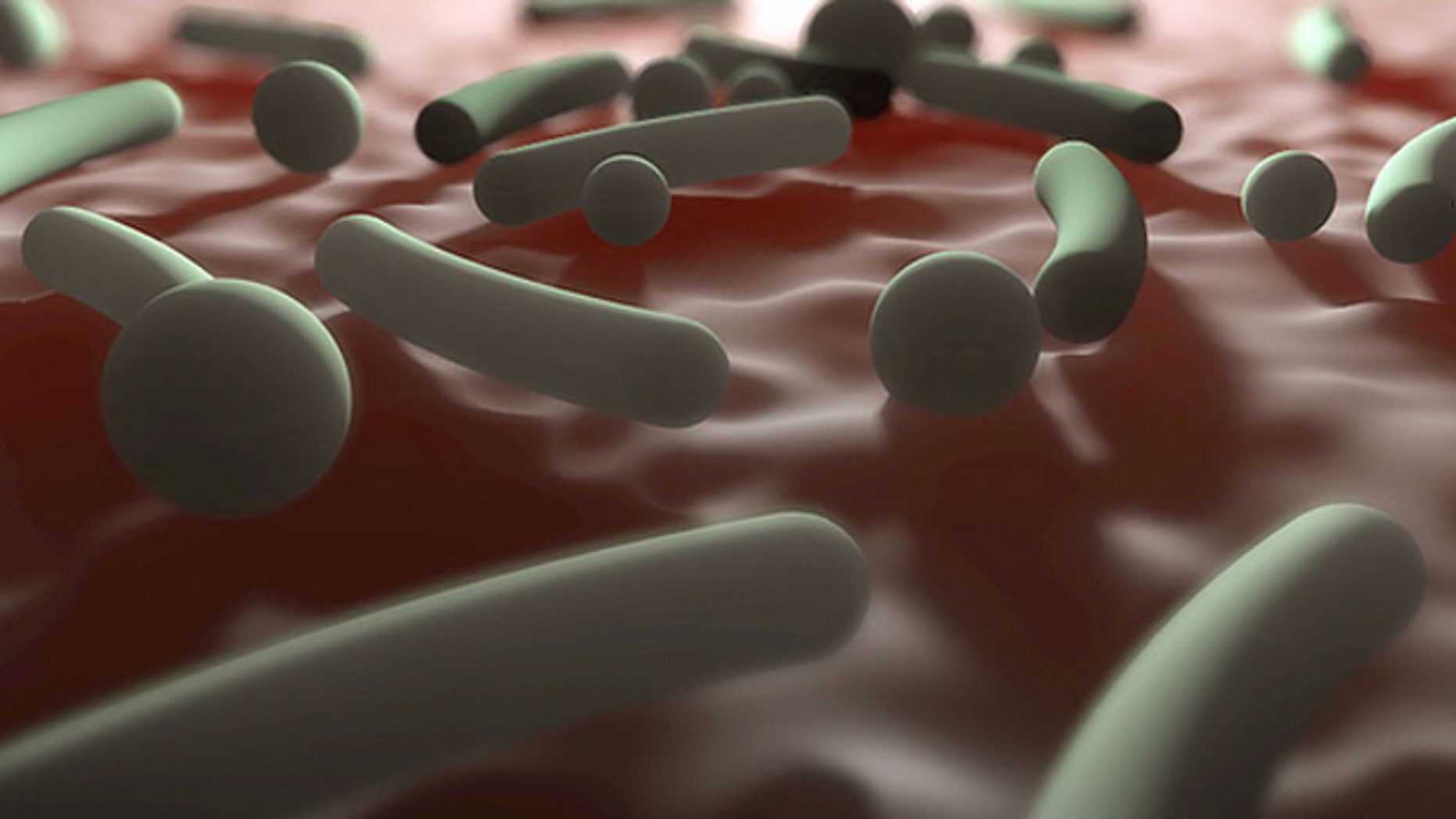 People who follow the hunter-gatherer lifestyle and don't have contact with industrialized cultures tend to have more diverse bacteria in and on their bodies.