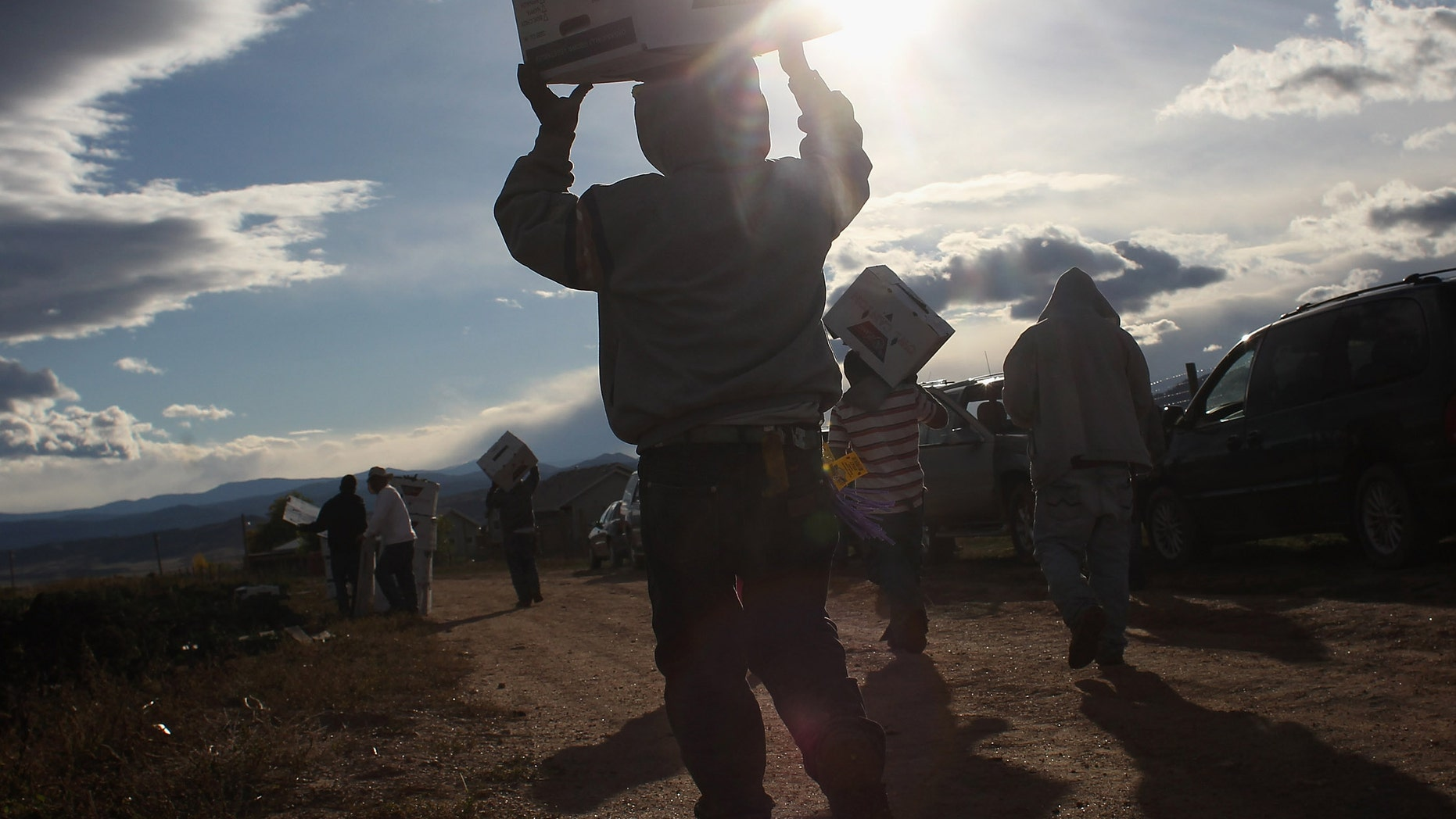"""WELLINGTON, CO - OCTOBER 11:  Mexican migrant workers carry boxes of organic kale during the fall harvest at Grant Family Farms on October 11, 2011 in Wellington, Colorado. Although demand for the farm's organic produce is high, Andy Grant said that his migrant labor force, mostly from Mexico, is sharply down this year and that he'll be unable to harvest up to a third of his fall crops, leaving vegetables in the fields to rot. He said that stricter U.S. immigration policies nationwide have created a """"climate of fear"""" in the immigrant community and many workers have either gone back to Mexico or have been deported. Although Grant requires proof of legal immigration status from his employees, undocumented migrant workers can easily obtain falsified permits in order to work throughout the U.S. Many farmers nationwide say they have found it nearly impossible to hire American citizens for seasonal labor-intensive farm work. (Photo by John Moore/Getty Images)"""