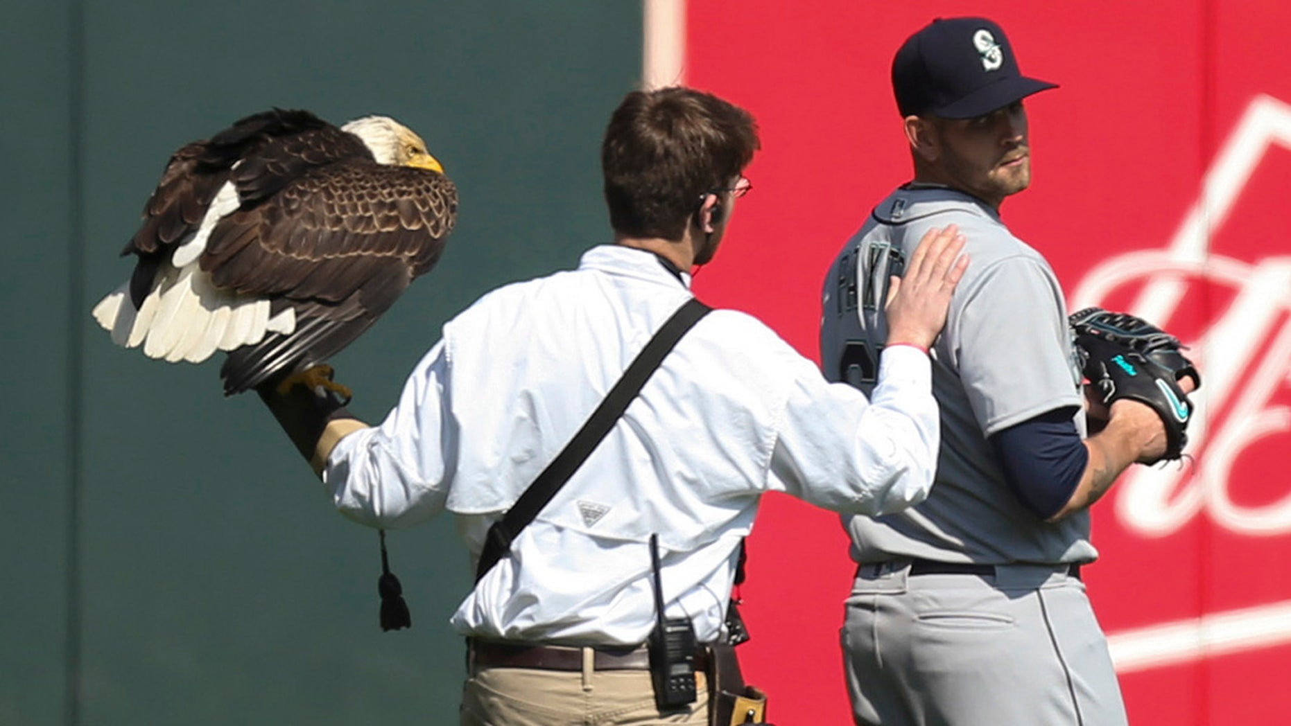 The handler for an American eagle that was to fly to the pitcher's mound during the national anthem pats Seattle Mariners starting pitcher James Paxton, a Canadian, after the eagle chose to land on his shoulder instead.
