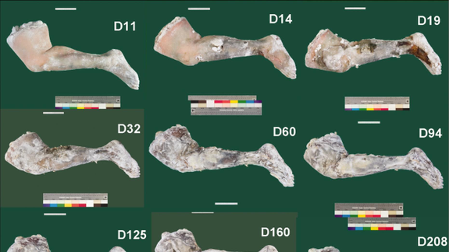 Mummified fresh human tissue