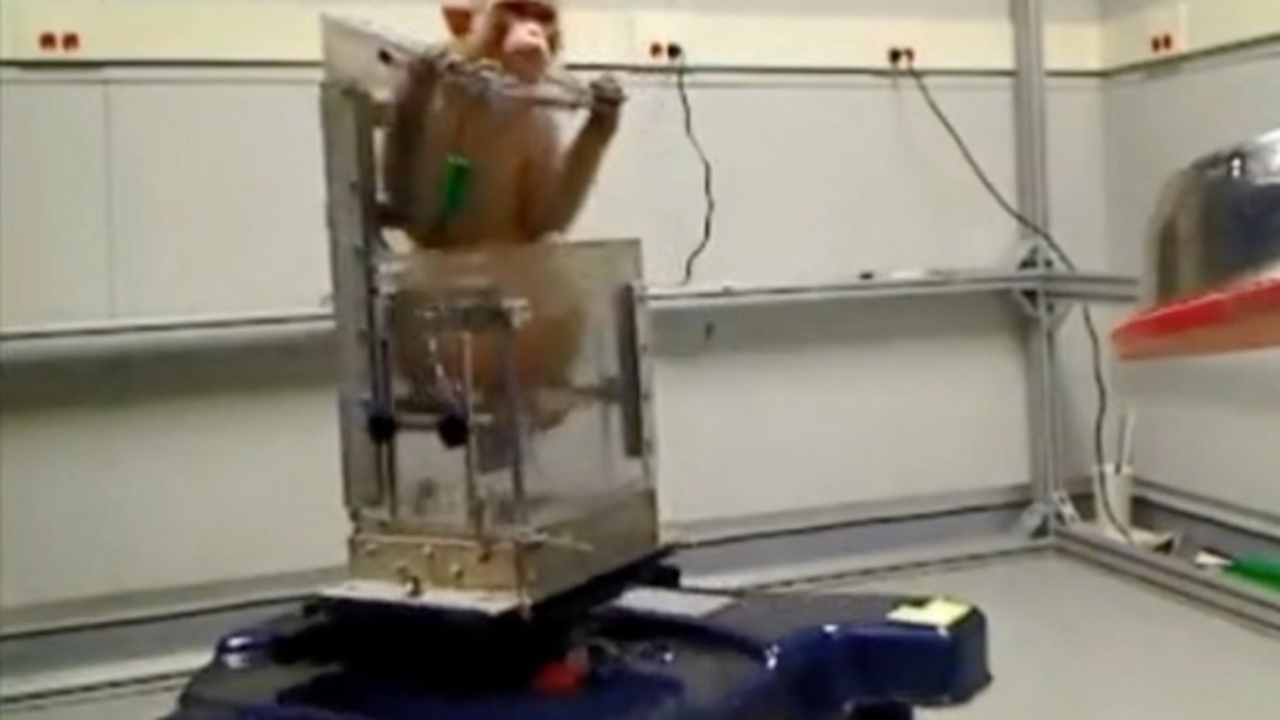 A monkey controls a wheelchair using only his thoughts. His goal? A bowl of tasty grapes.