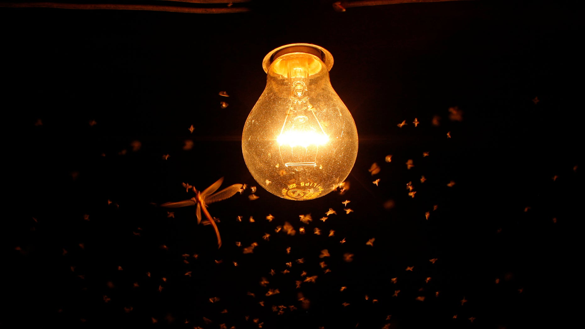 File photo. Mosquitoes and a dragonfly fly around a lit bulb on a hot summer night at the Turquillas land in Osuna, southern Spain.