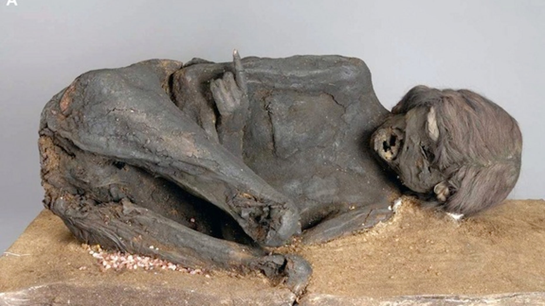 An Incan mummy that was sitting in German collections for more than a century.