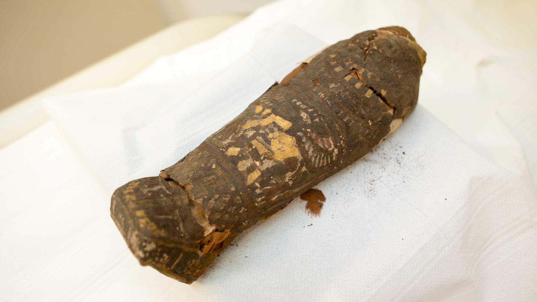 The tiny mummy at Maidstone Museum (Maidstone Museum)