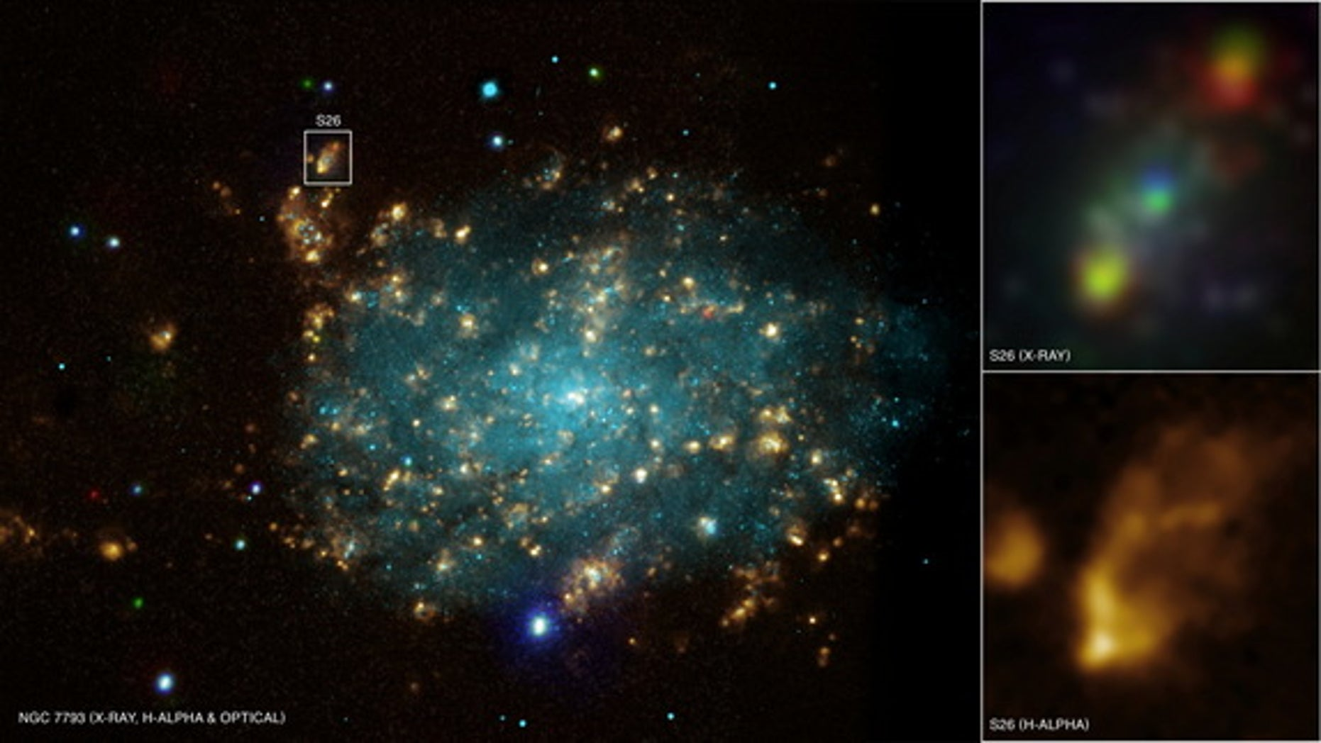 This image shows the galaxy NGC 7793 about 12 million light-years from Earth. The galaxy is home to the voracious black hole P13, which is easily seen as the brightest blue source near the bottom of the image.