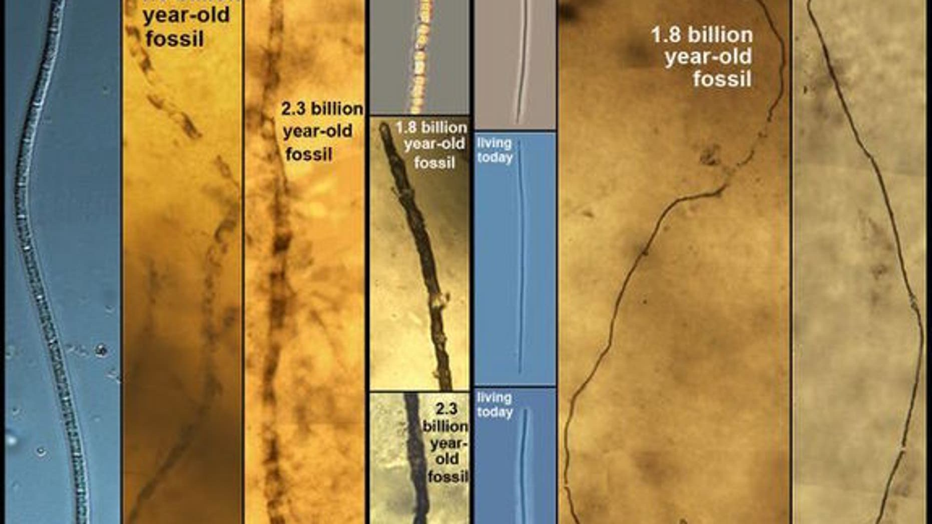 These sulfur bacteria haven't evolved for billions of years.