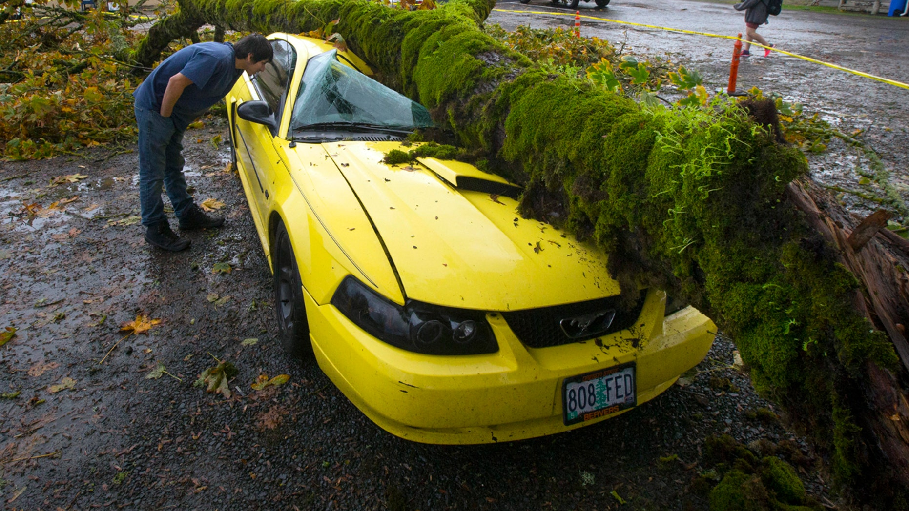 Oct. 15, 2016: Angel Ramon peers into what is left of his 2003 Mustang after giant tree limb fell on it while he was at work in the nearby Dari Market in Coburg, Ore.