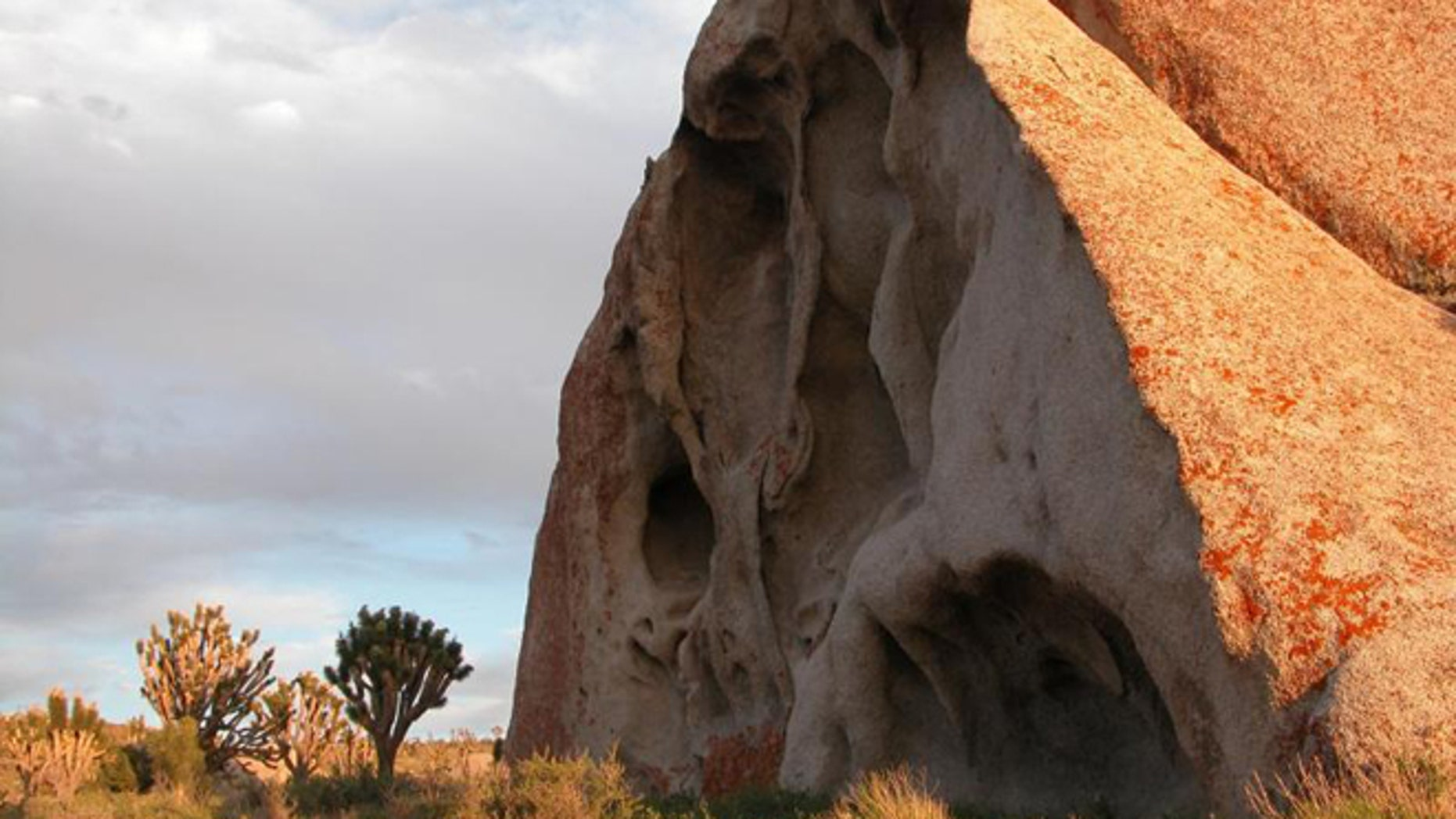 Boulder and Joshua trees on Cima Dome in Mojave National Preserve