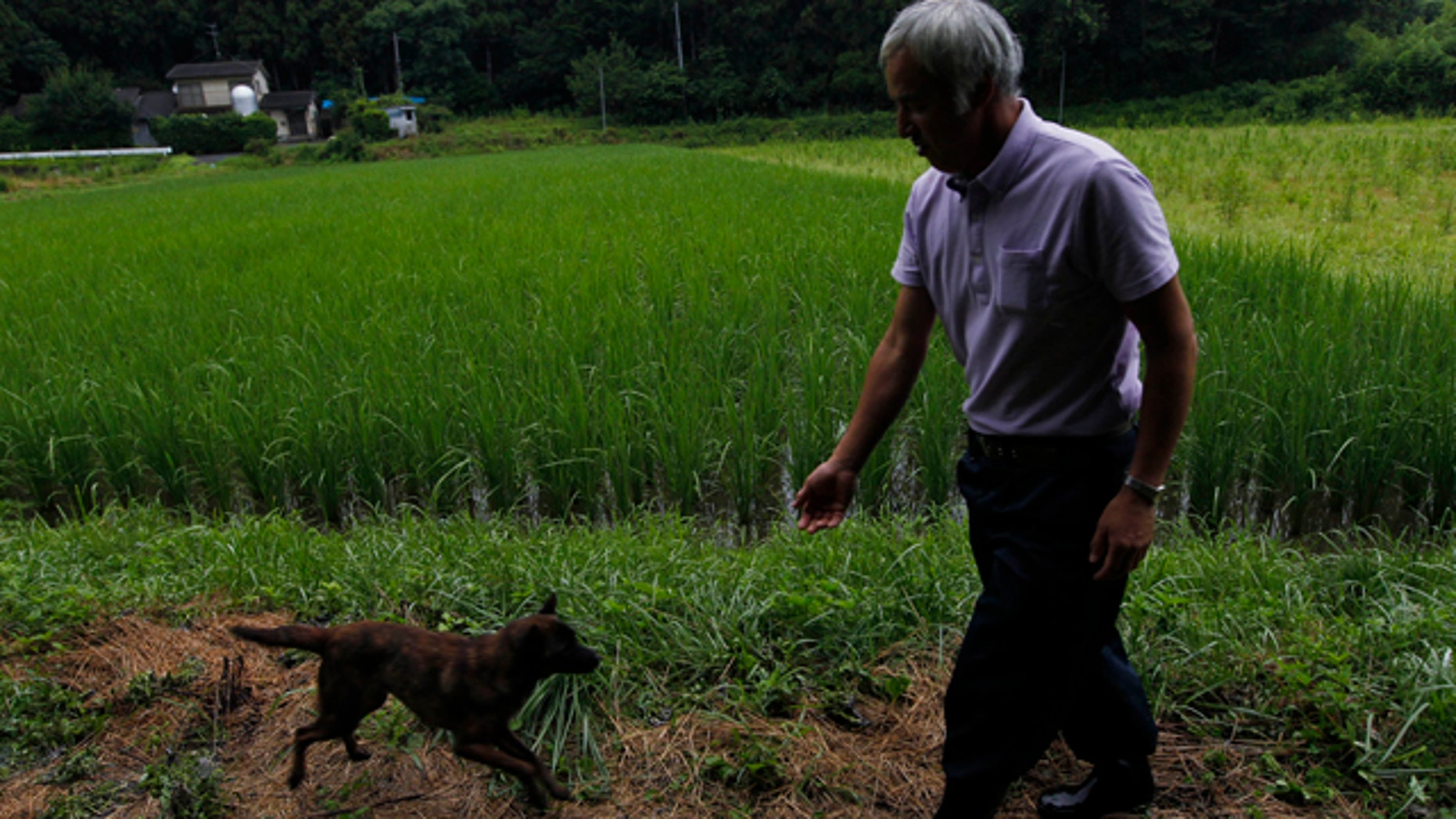 Aug. 19, 2011: Naoto Matsumura's dog Aki runs to meet him while he checks on his rice paddy in Tomioka town, Fukushima, northeastern Japan. Nearly six months after Japan's catastrophic earthquake and tsunami, the 53-year-old believes he is the only inhabitant left in this town sandwiched between the doomed Fukushima Dai-ichi nuclear power station to the north and another sprawling nuclear plant to the south.