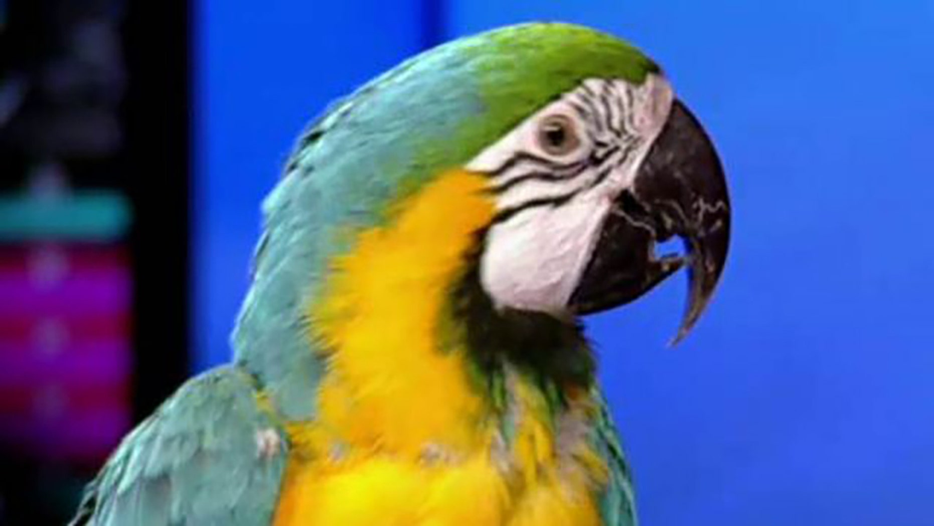 More than 600 birds, including Macaws, were removed from an Ohio home.