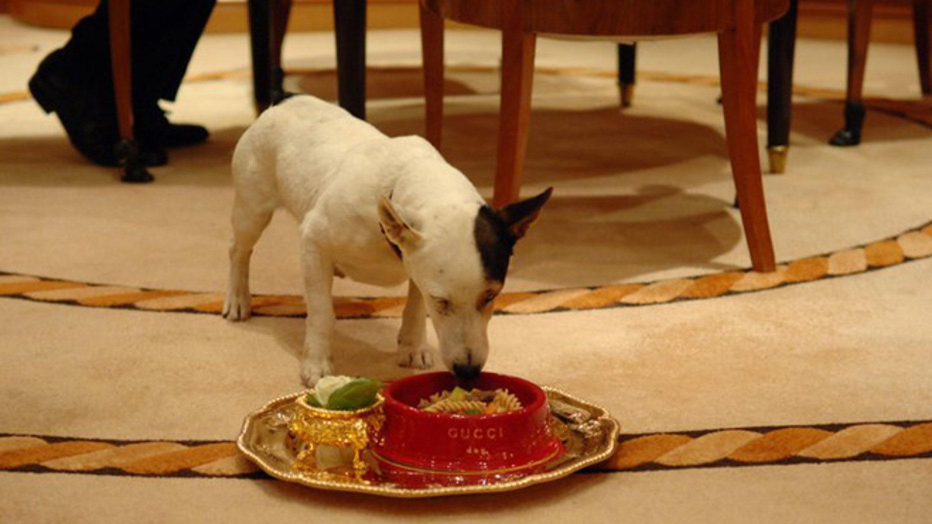 The VIP Pet Program
