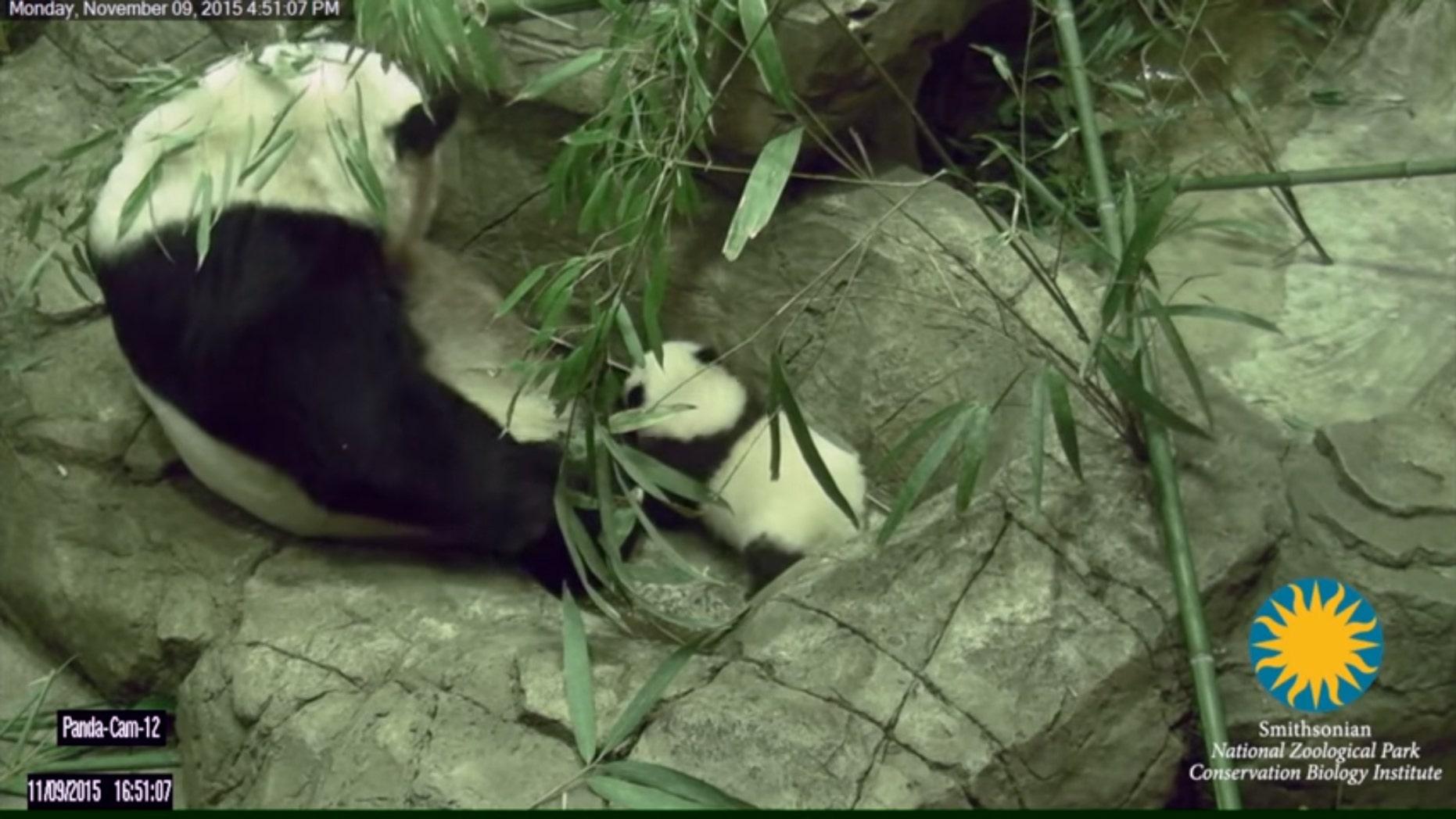 (Smithsonian's National Zoo)