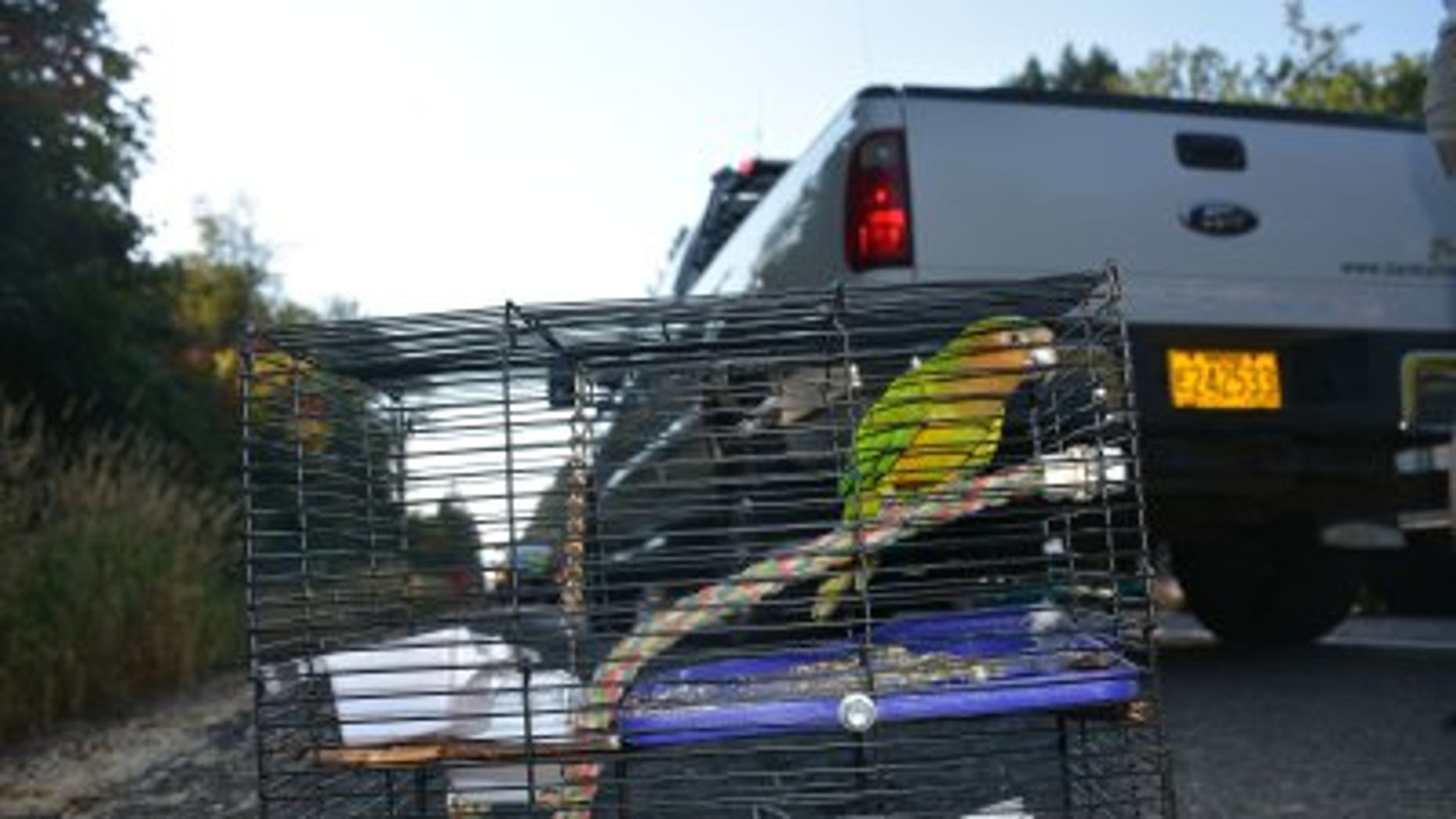 The parakeet survived the crash on Highway 26 in Oregon.