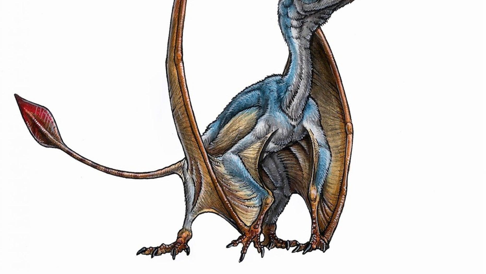 An artist's reconstruction of a new species of pterosaur, Allkaruen koi.