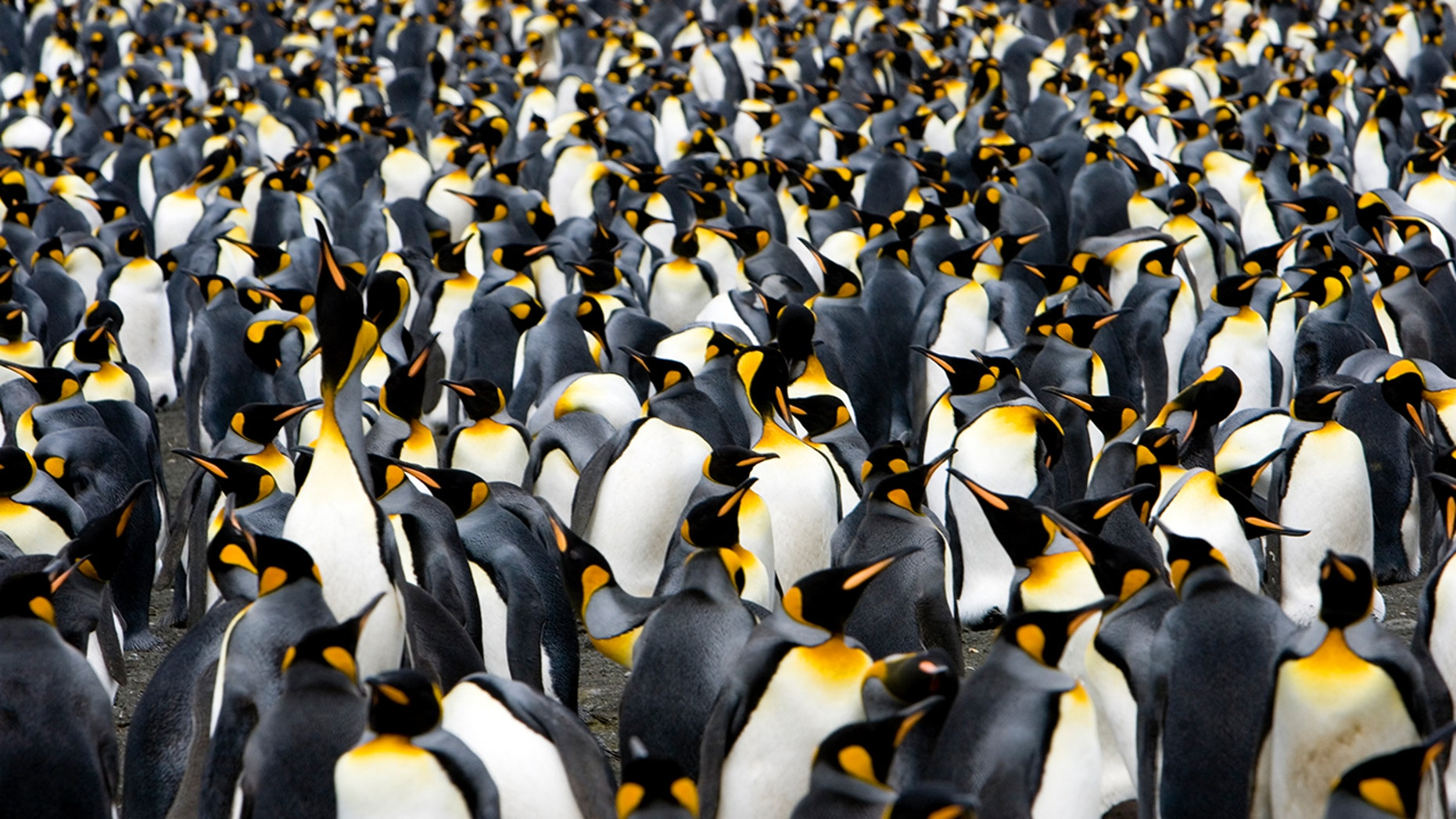 972 students dressed like penguins and broke the world record
