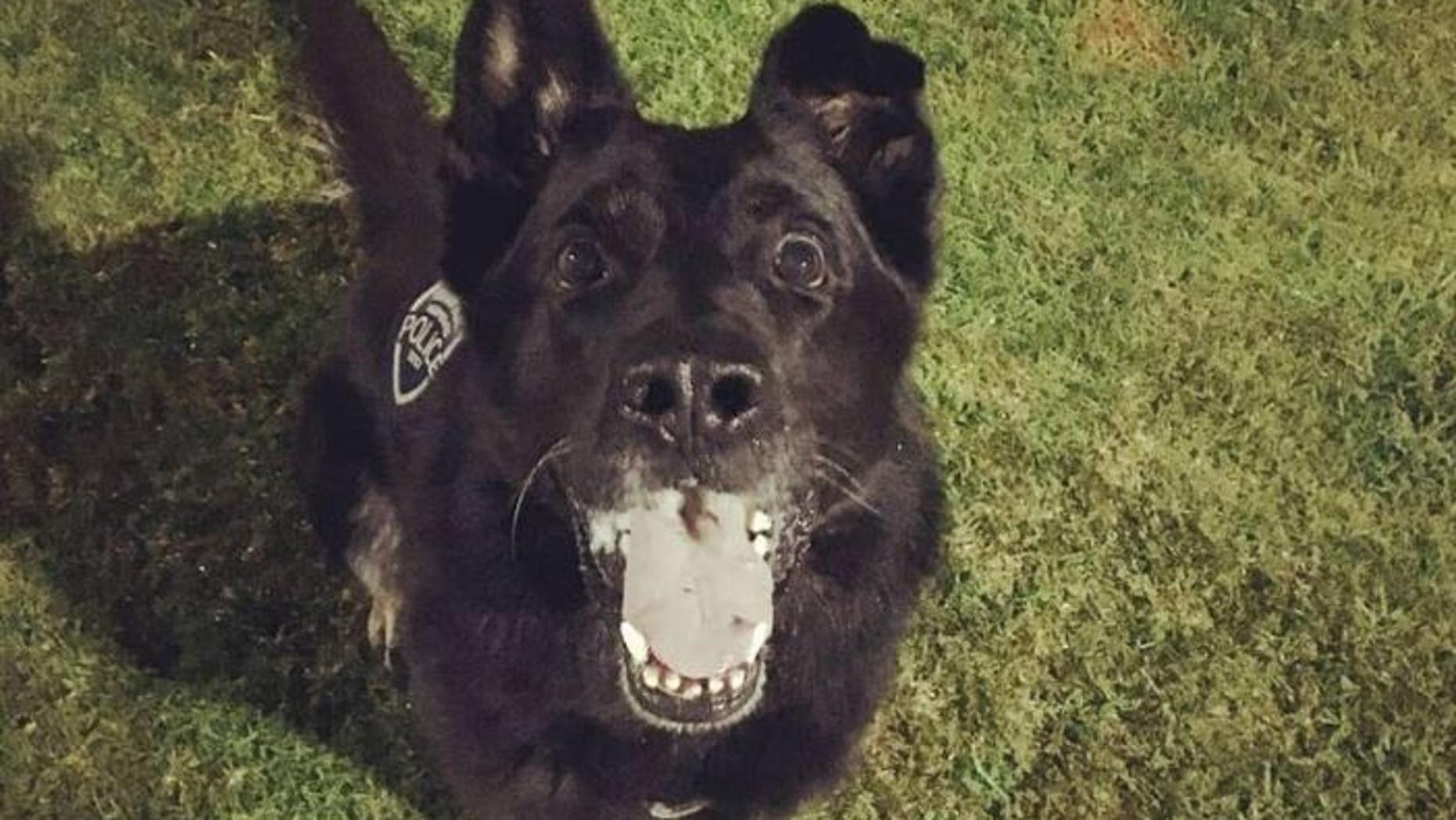 Perro, a K9 dog with the Fountain Valley Police Department, was punched while helping officers arrest a suspect.