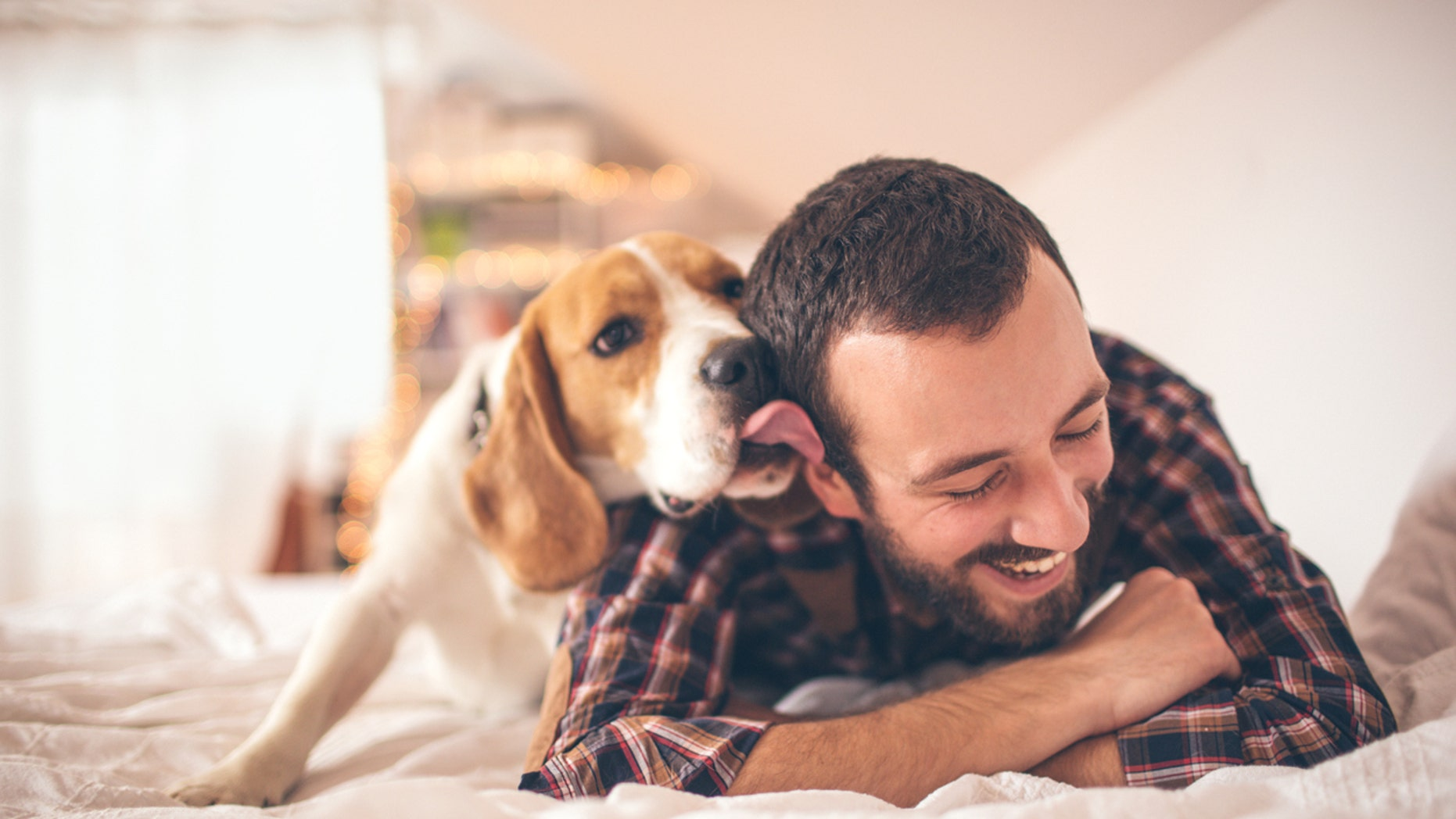 Owning dog can help boost your health in more ways than one.