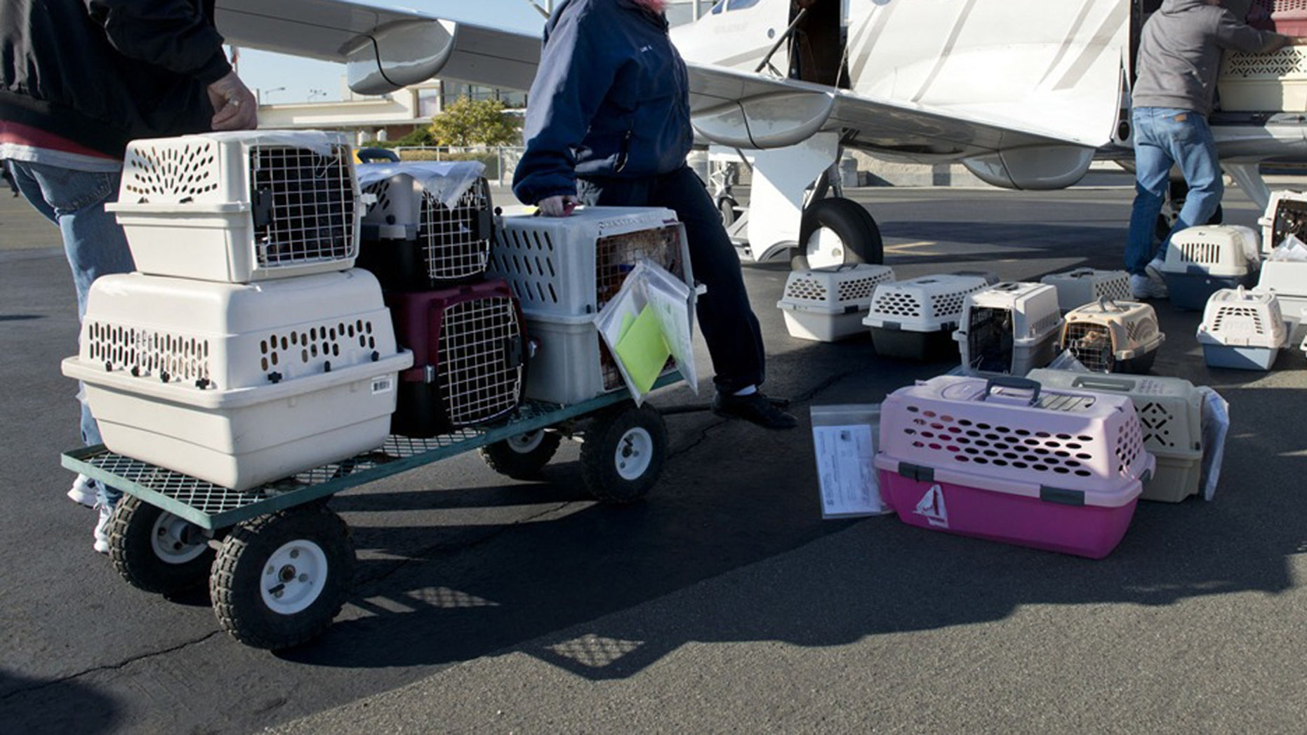 Crated animals will no longer be able to fly as checked luggage on Delta next year.
