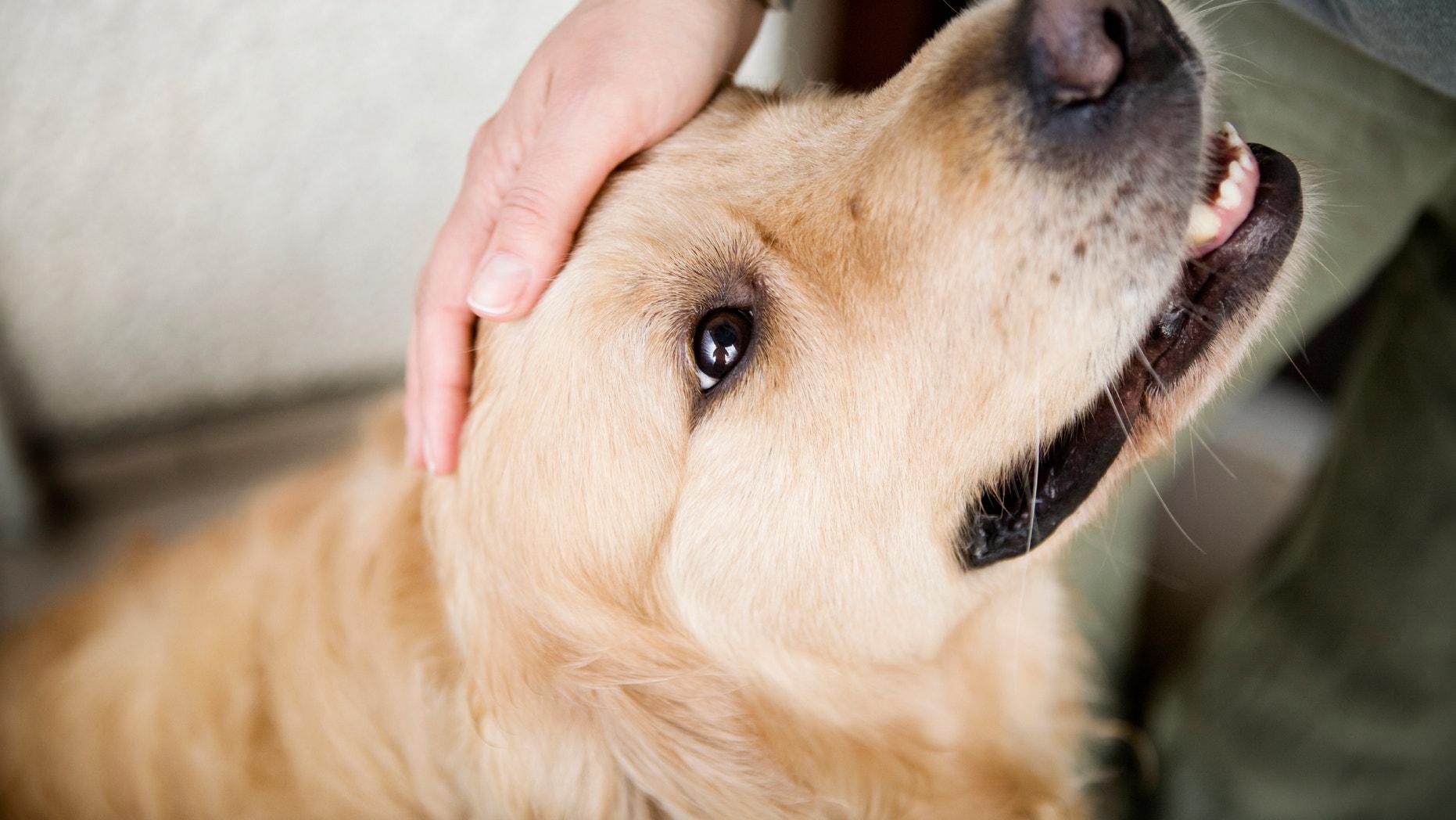 Hand caressing dog's head