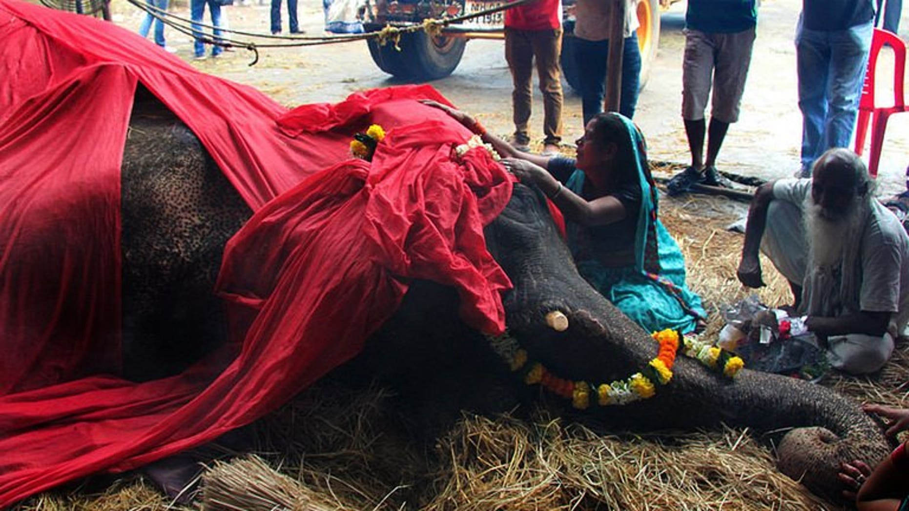 A woman mourns alongside the body of Bijlee, an elephant who died aged 58, in Mumbai, on June 30, 2013. Bijlee's plight illustrated the mistreatment of the animals as street performers.