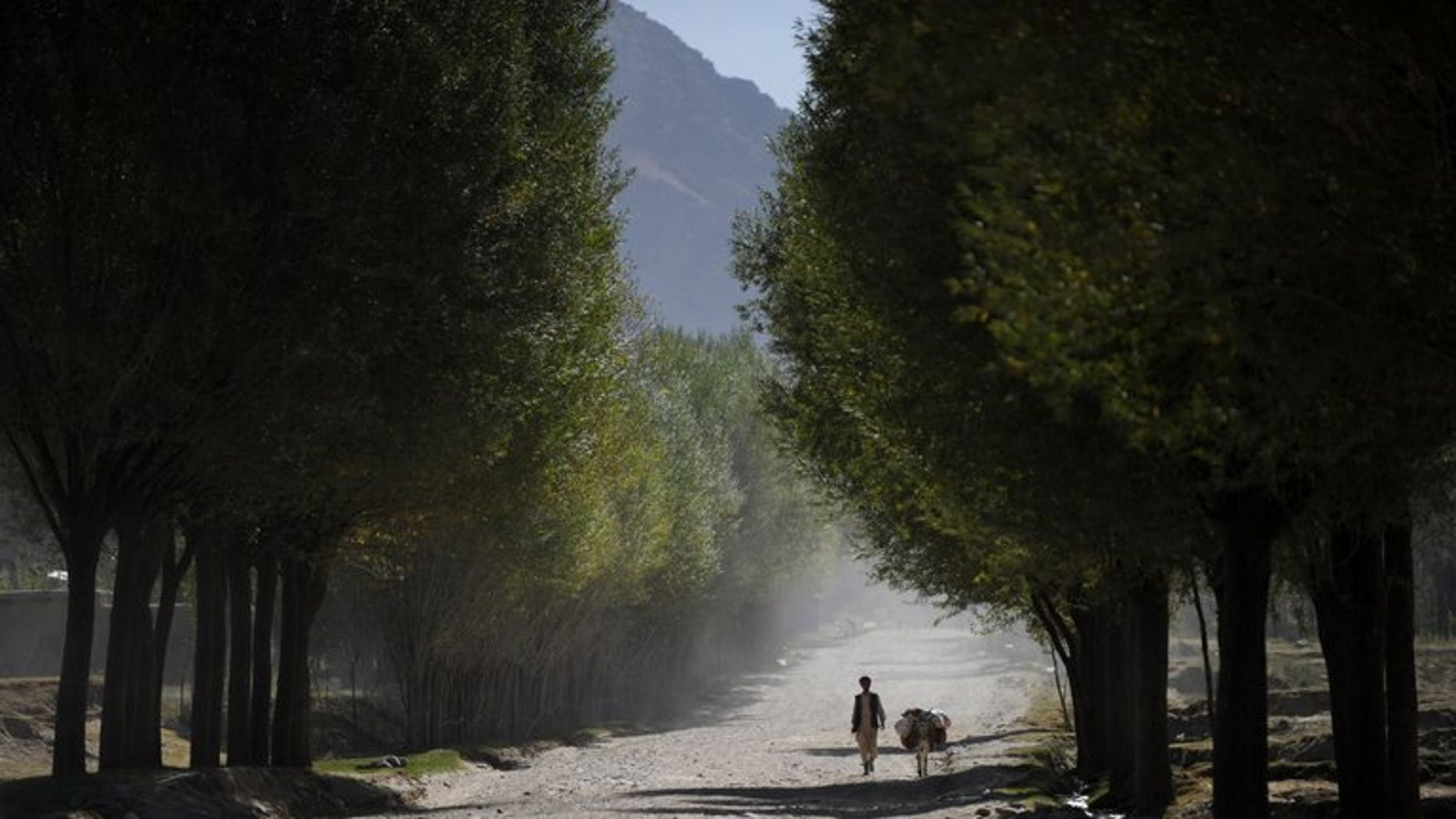 A villager walks with a donkey in Afghanistan's Badakhshan province, on October 5, 2012. A suicide bomber has riden a donkey into an Afghan and NATO military convoy, killing three Western soldiers and their Afghan interpreter, officials said.