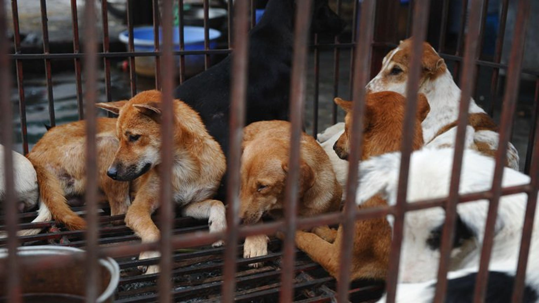 Dogs waiting to be slaughtered for meat in Hanoi, on July 26, 2012. Hundreds of villagers in northern Vietnam have signed a petition admitting taking part in the lynching of two suspected dog-snatchers last month, state media reported Monday.