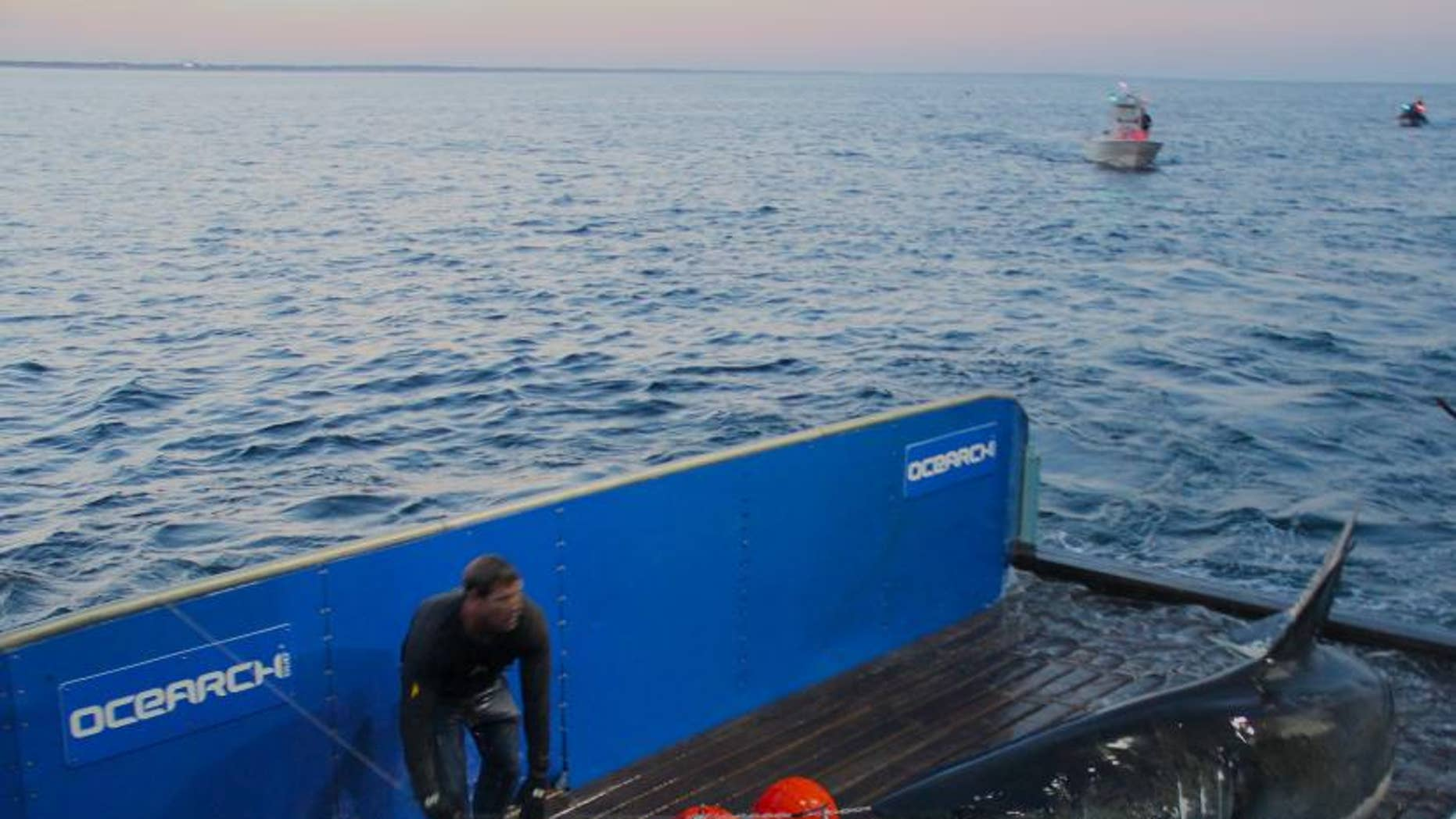 Great white shark Mary Lee has travelled more than 34,000 miles since September 2012.