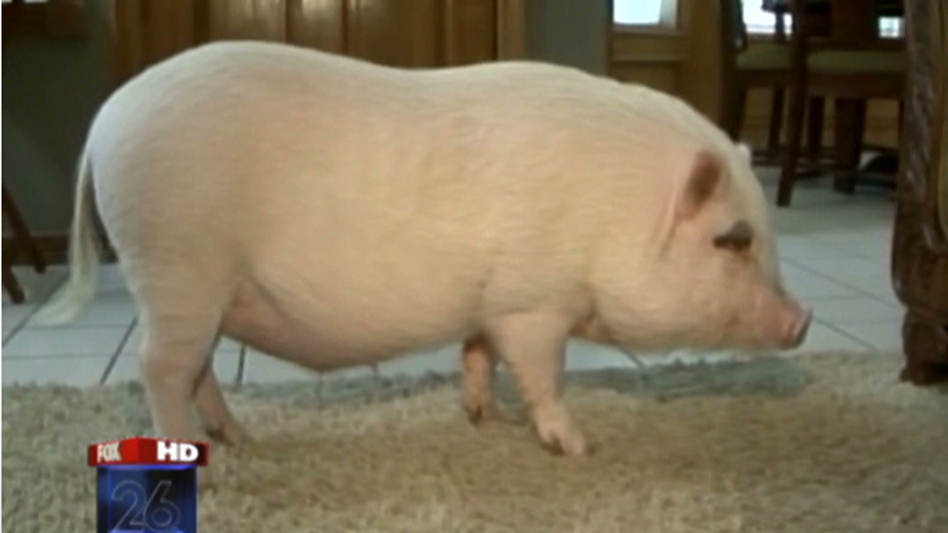 Wilbur gets to stay with family after judge's ruling.