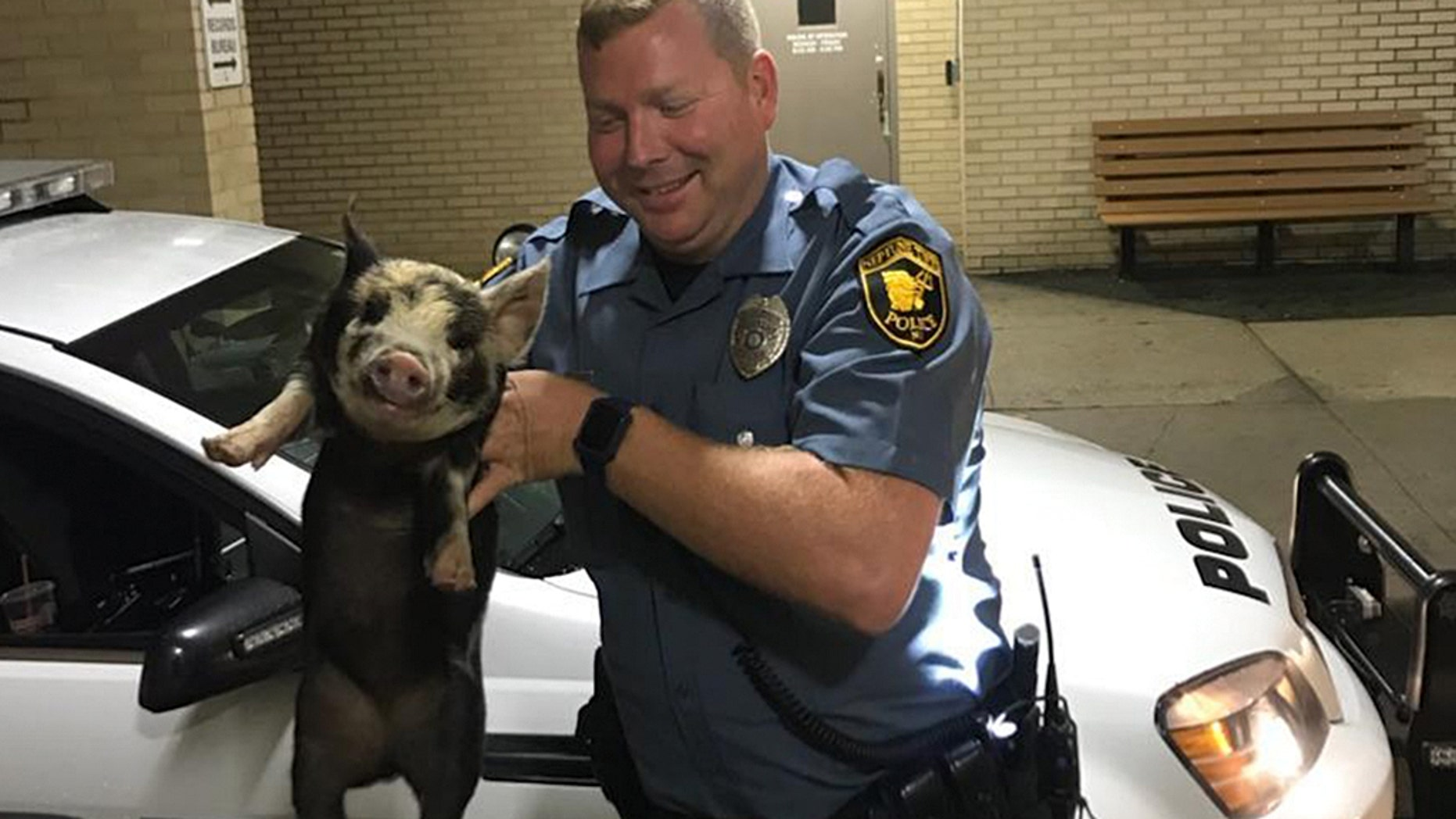"A pig nicknamed ""Pork Roll"" was recused by police in New Jersey over Memorial Day Weekend."
