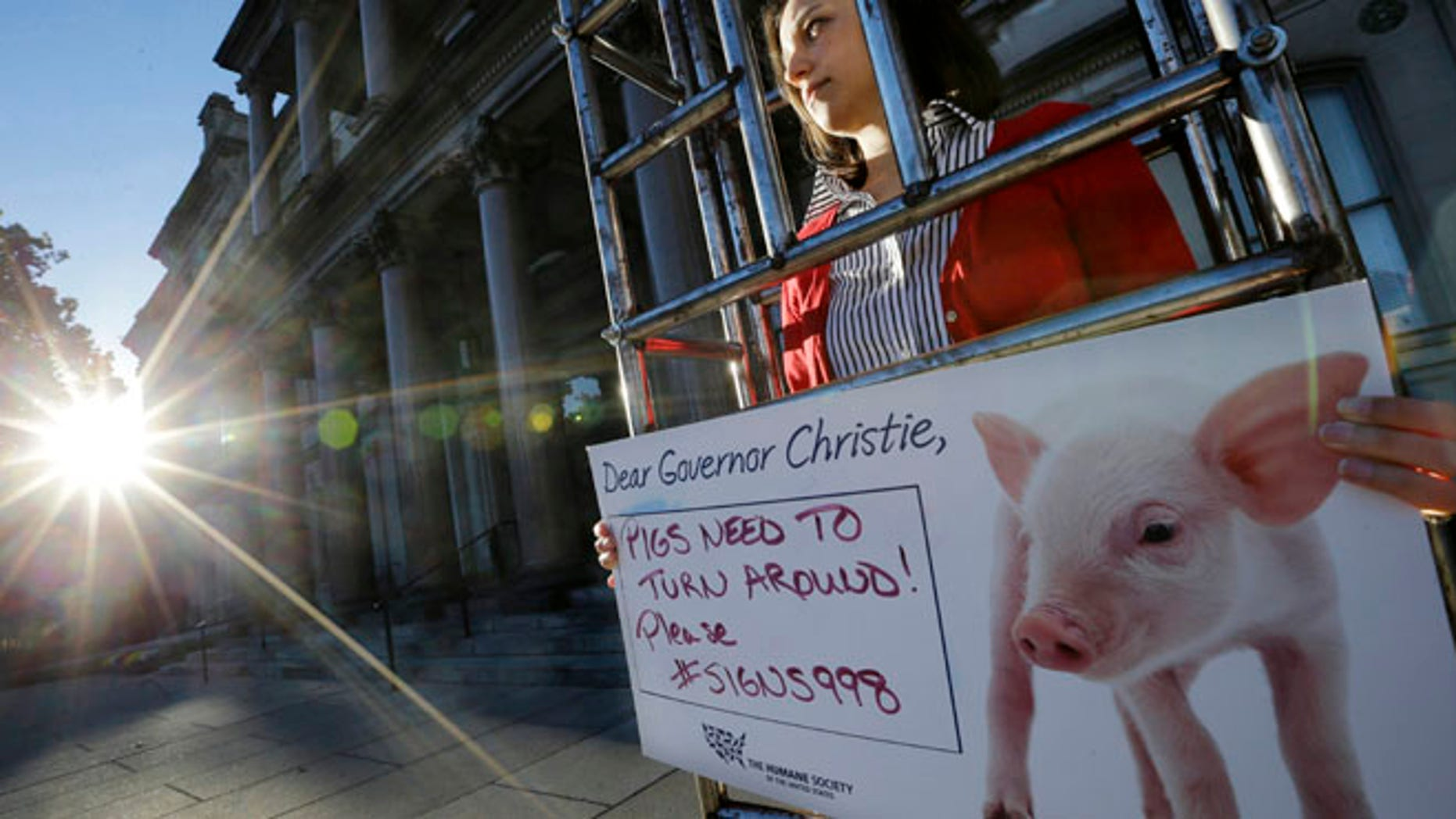 """Oct. 27, 2014: Sarah Swingle, of Charleston, S.C., with the Humane Society of the United States, stands immobilized in a human-sized """"gestation crate,"""" in front of the Statehouse, in Trenton, N.J. (AP)"""