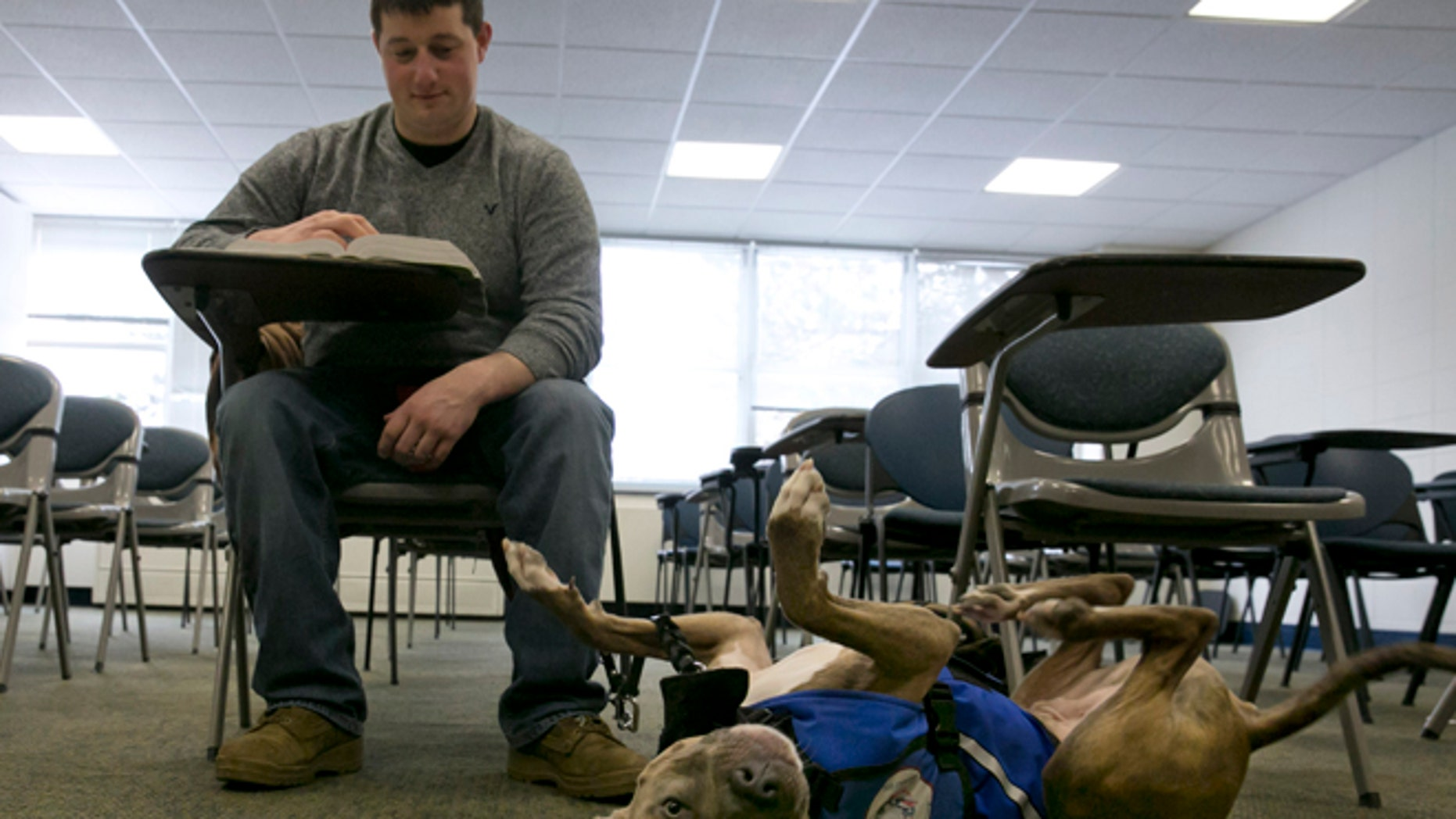 Feb. 4, 2015: Former U.S. Marine Joe Bonfiglio, 24, and his pit bull assistance dog Zen, sit in a classroom on the campus of Mercy College, in Dobbs Ferry, N.Y.