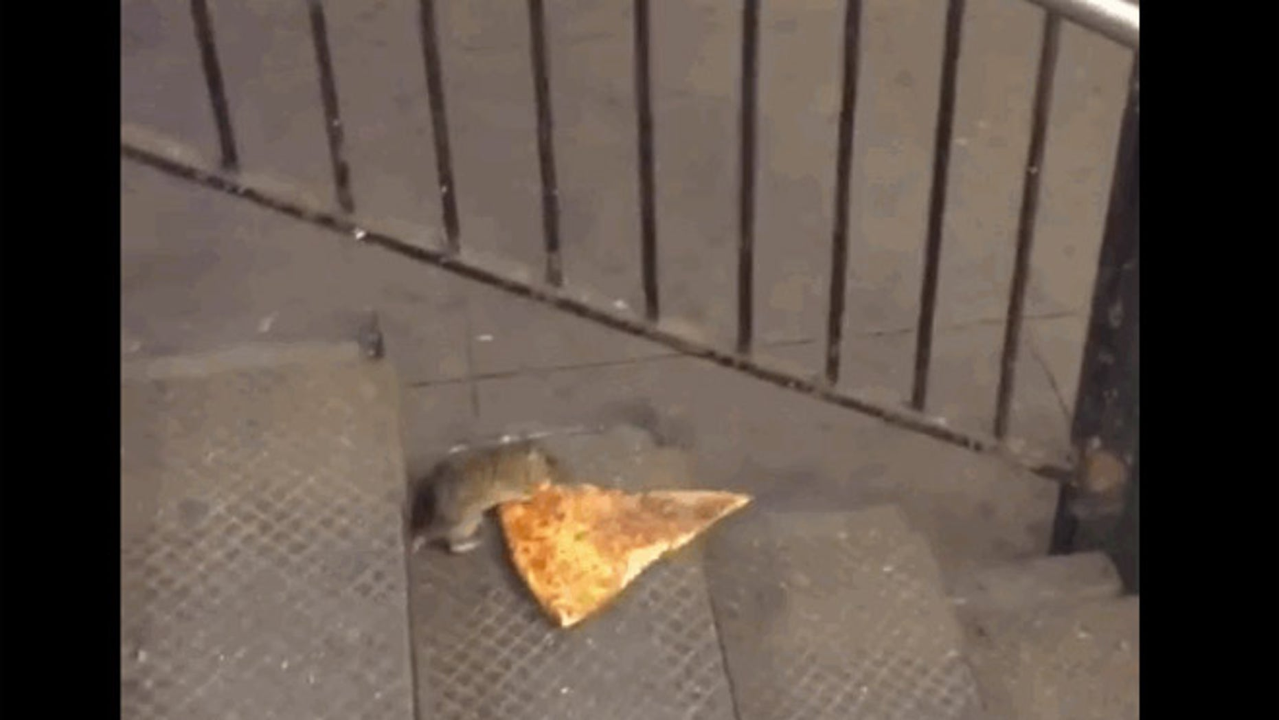 Behold Pizza rat.