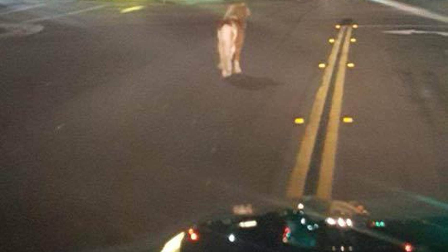 A pony was spotted out and about in a California city on Saturday.