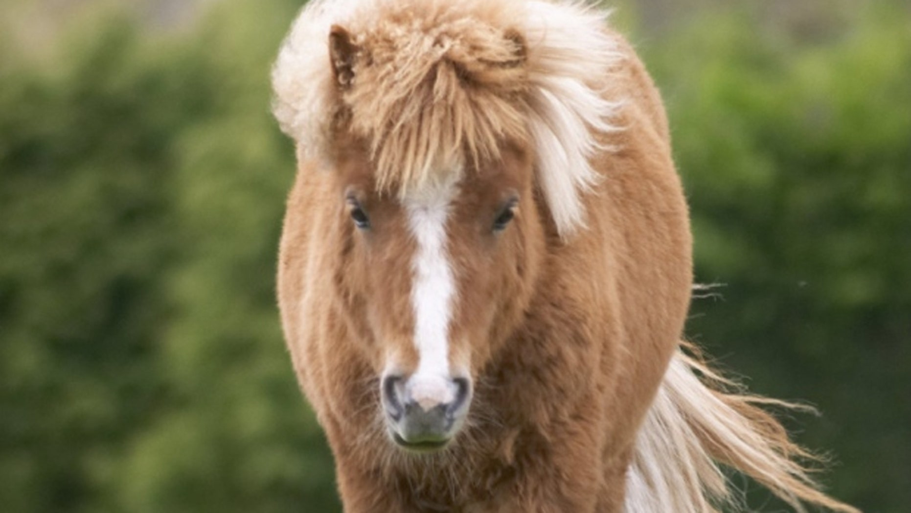 A pony like this was left at reception at a Travelodge.