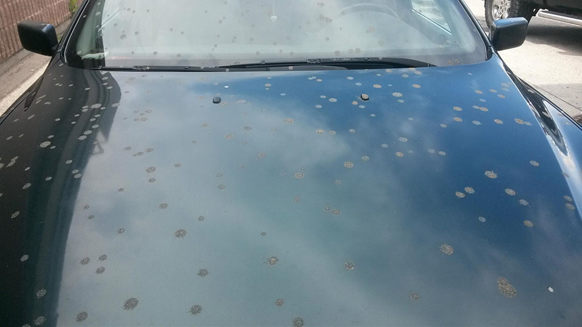 Residents of Kelowna, in British Columbia, claim their cars were covered in poop last month.