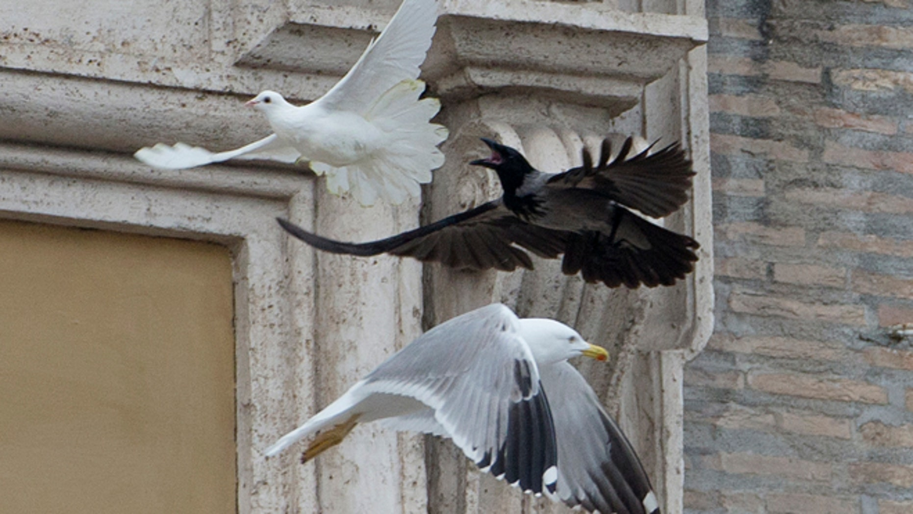 Jan. 26, 2014: A dove which was freed by children flanked by Pope Francis during the Angelus prayer, is chased by a black crow in St. Peter's Square, at the Vatican.