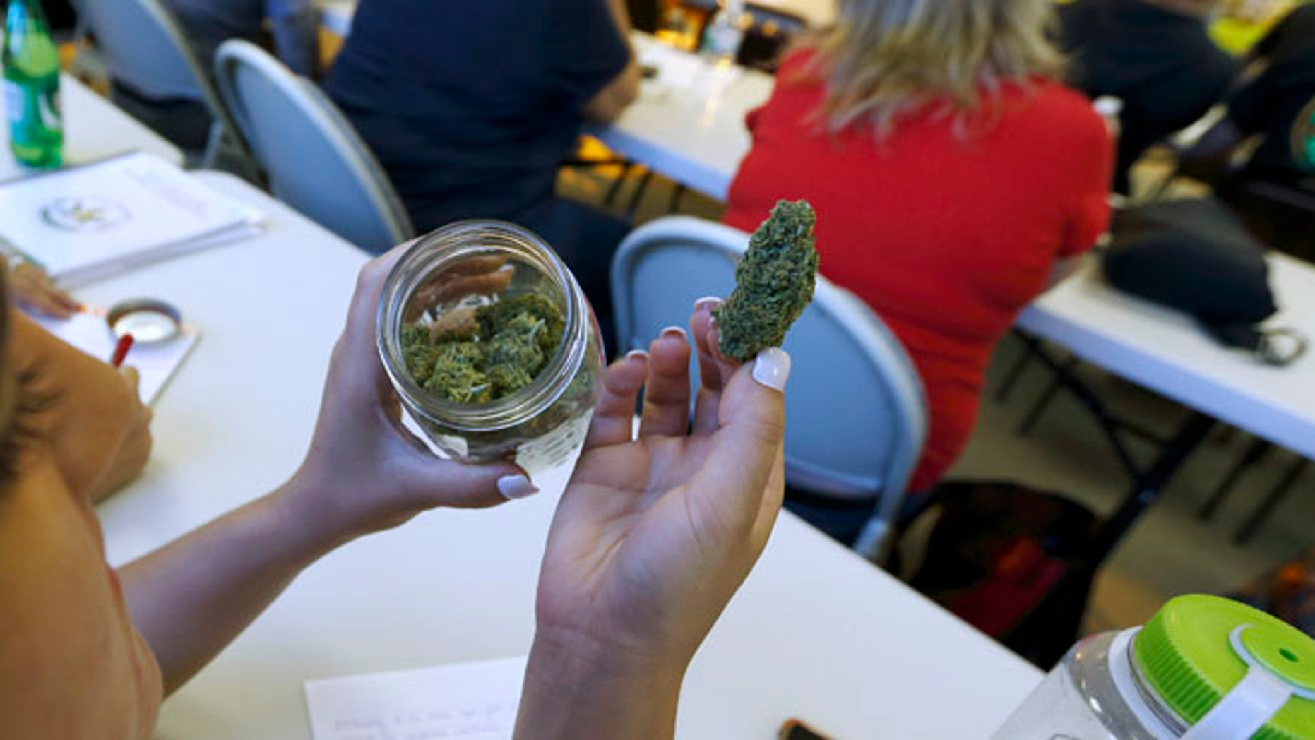 "July 10, 2014: A student examines a sample of the cannabis strain ""granddaddy purple"" during a cooking class at the New England Grass Roots Institute in Quincy, Mass."