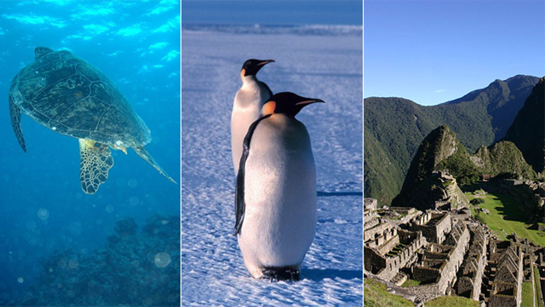 Australia's Great Barrier Reef, the Antarctica and Machu Picchu all suffer from environmental pressures.