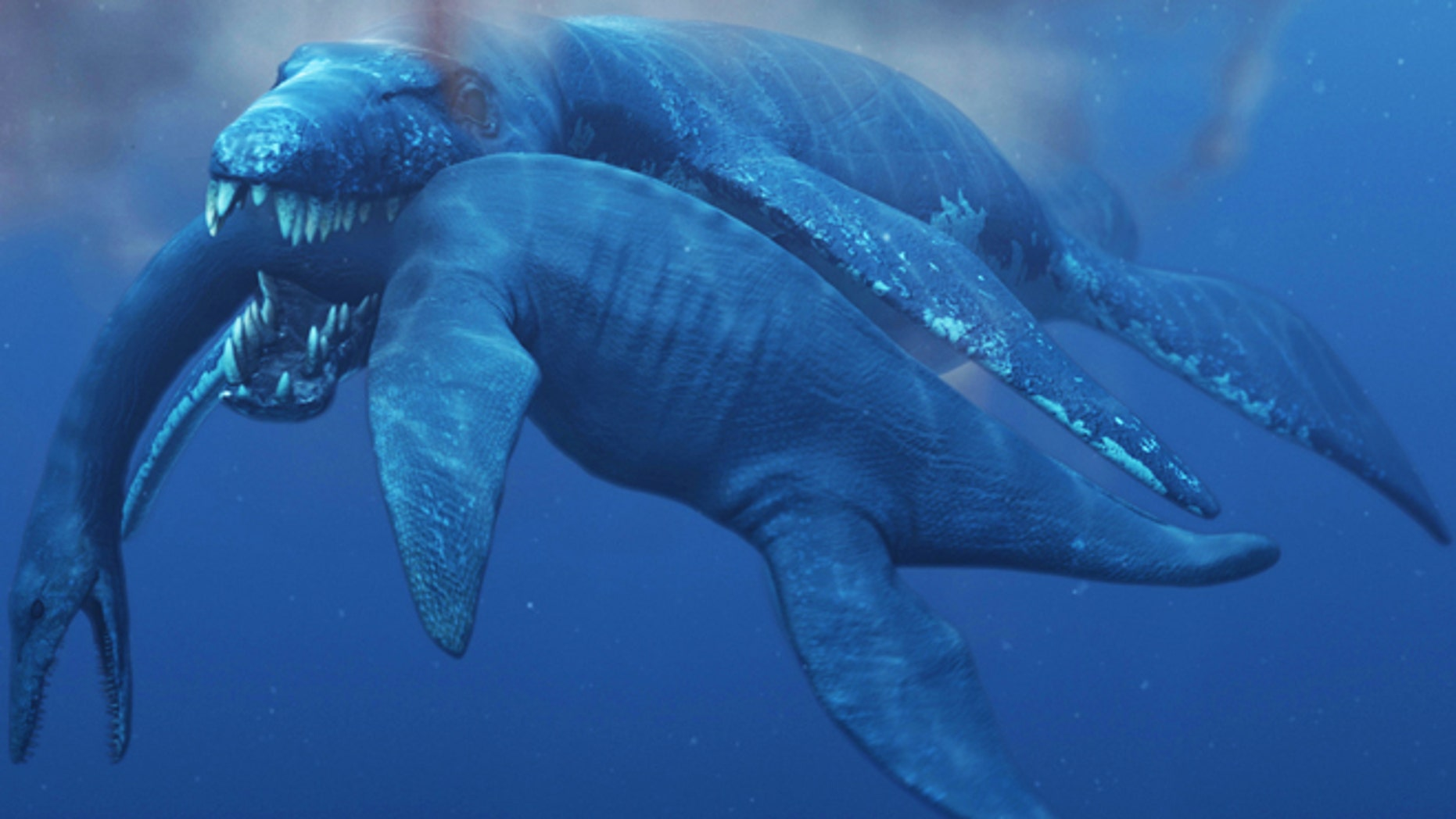 P. funkei likely preyed on plesiosaurs, related long-necked, small-headed reptiles.