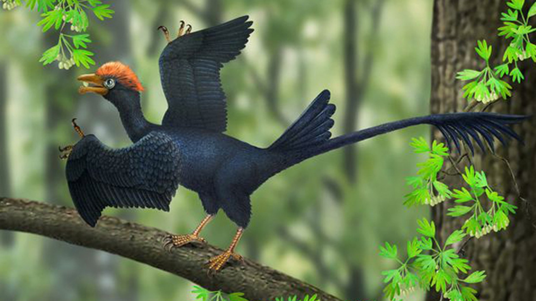 A reconstruction of a two-tailed 120-million-year-old Jeholornis.