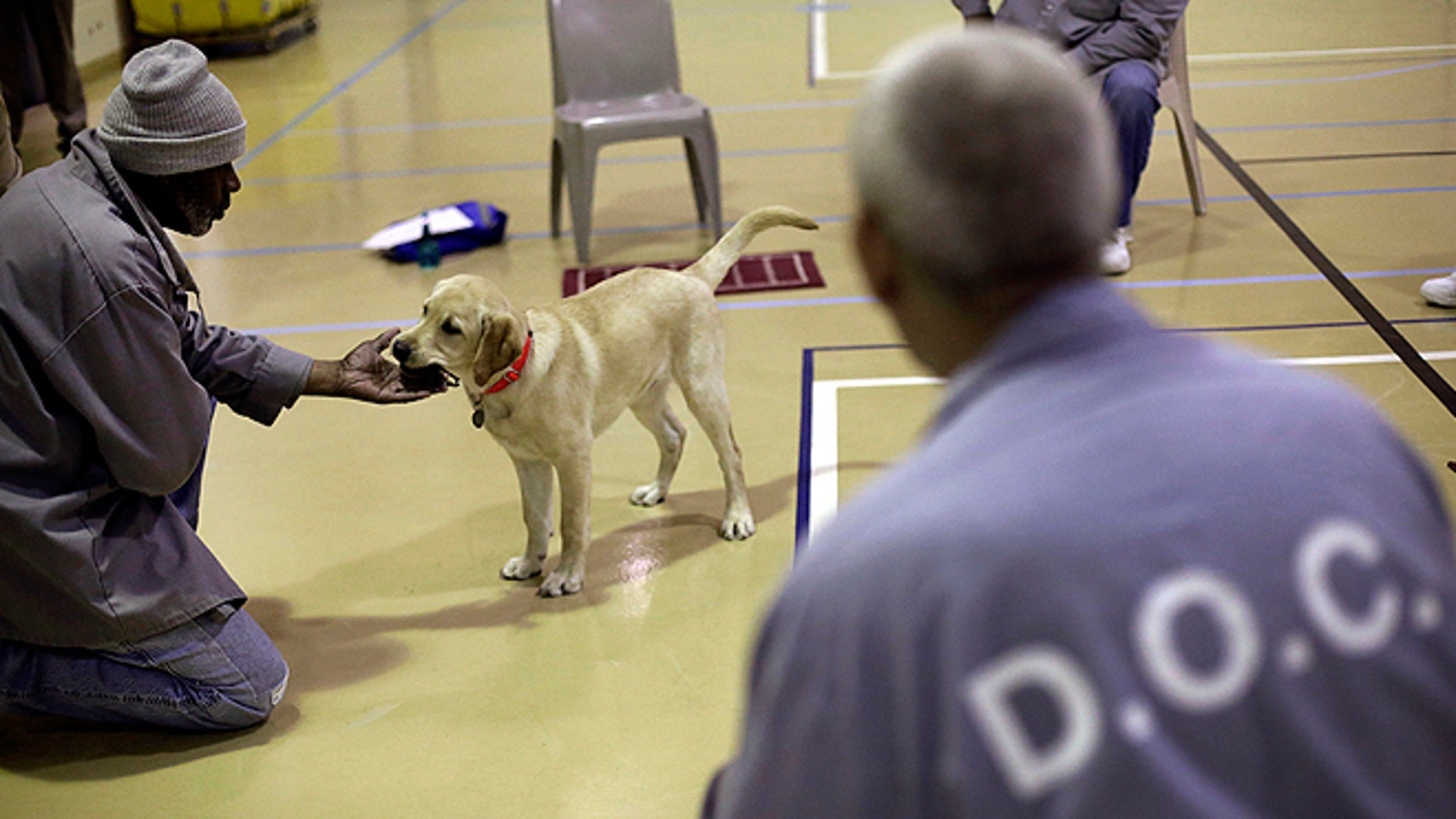 Dec. 18, 2012: Nero, a veteran assistance dog in training, takes a ball from inmate James Harrison during a training session at Western Correctional Institution in Cresaptown, Md. (AP)