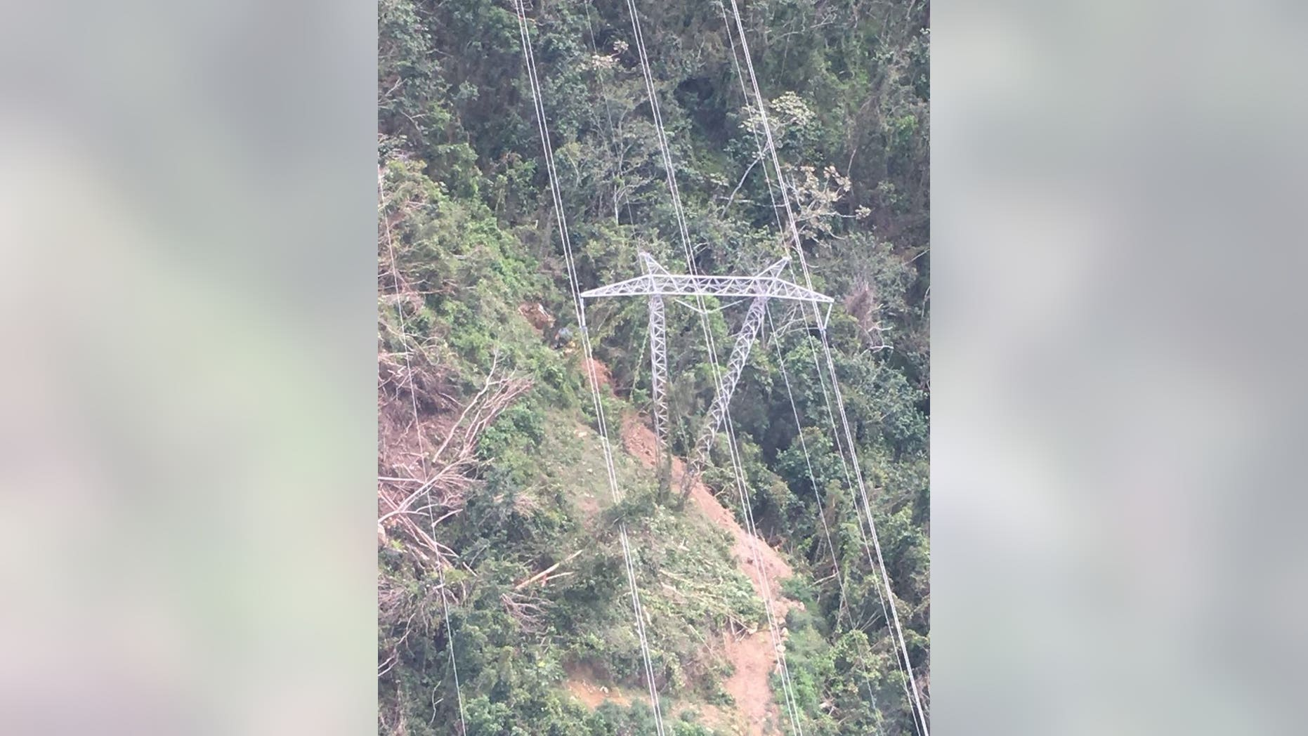 A downed tree caused the widespread power outage in Puerto Rico on Thursday, officials said.