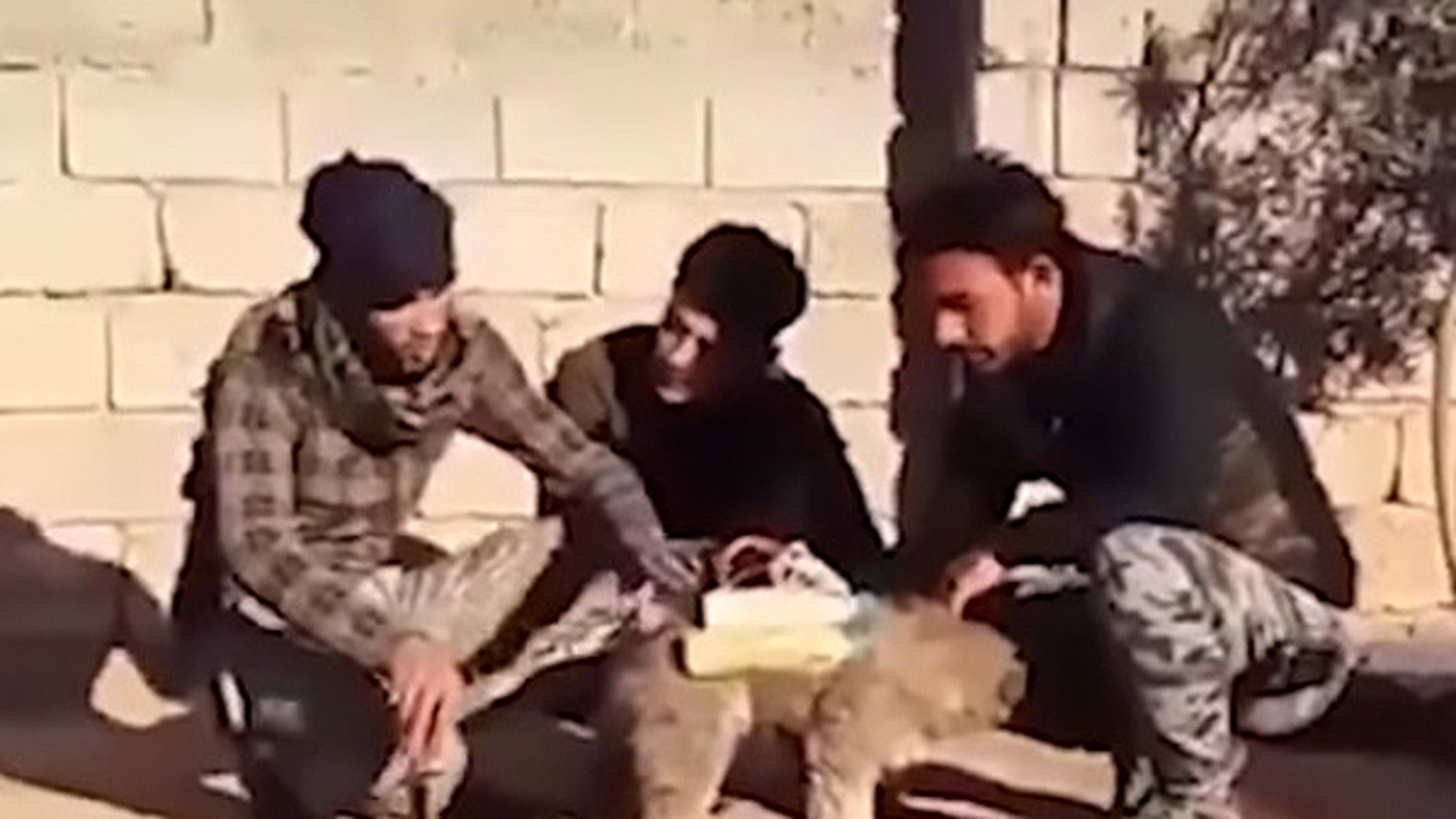 A group of Iraqi militia fighters claim on a video posted on youtube that they found this dog outfitted with a makeshift bomb.