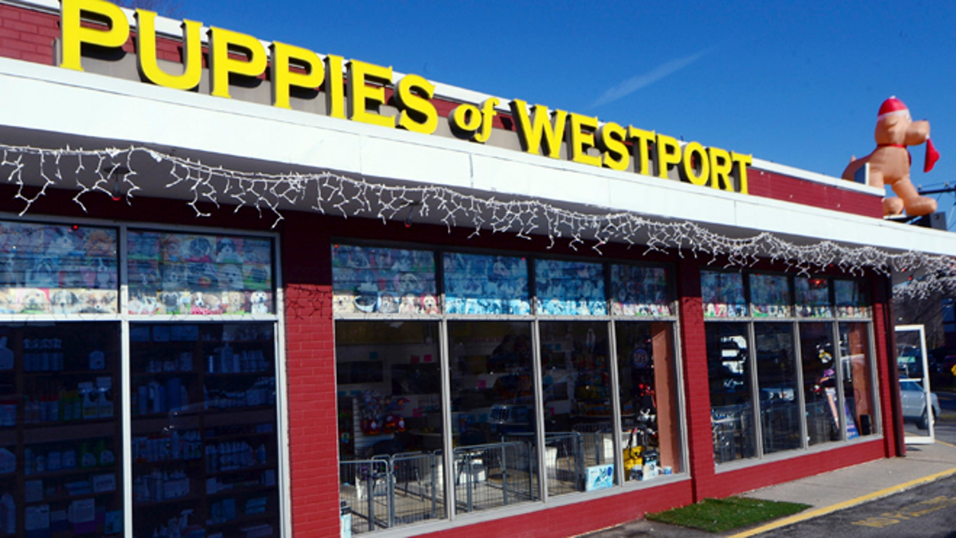 Jan. 15, 2014: Puppies of Westport, a pet shop in Westport, Conn., is open for business after police said a woman using a rock tried to smash open the front door of the closed pet store.