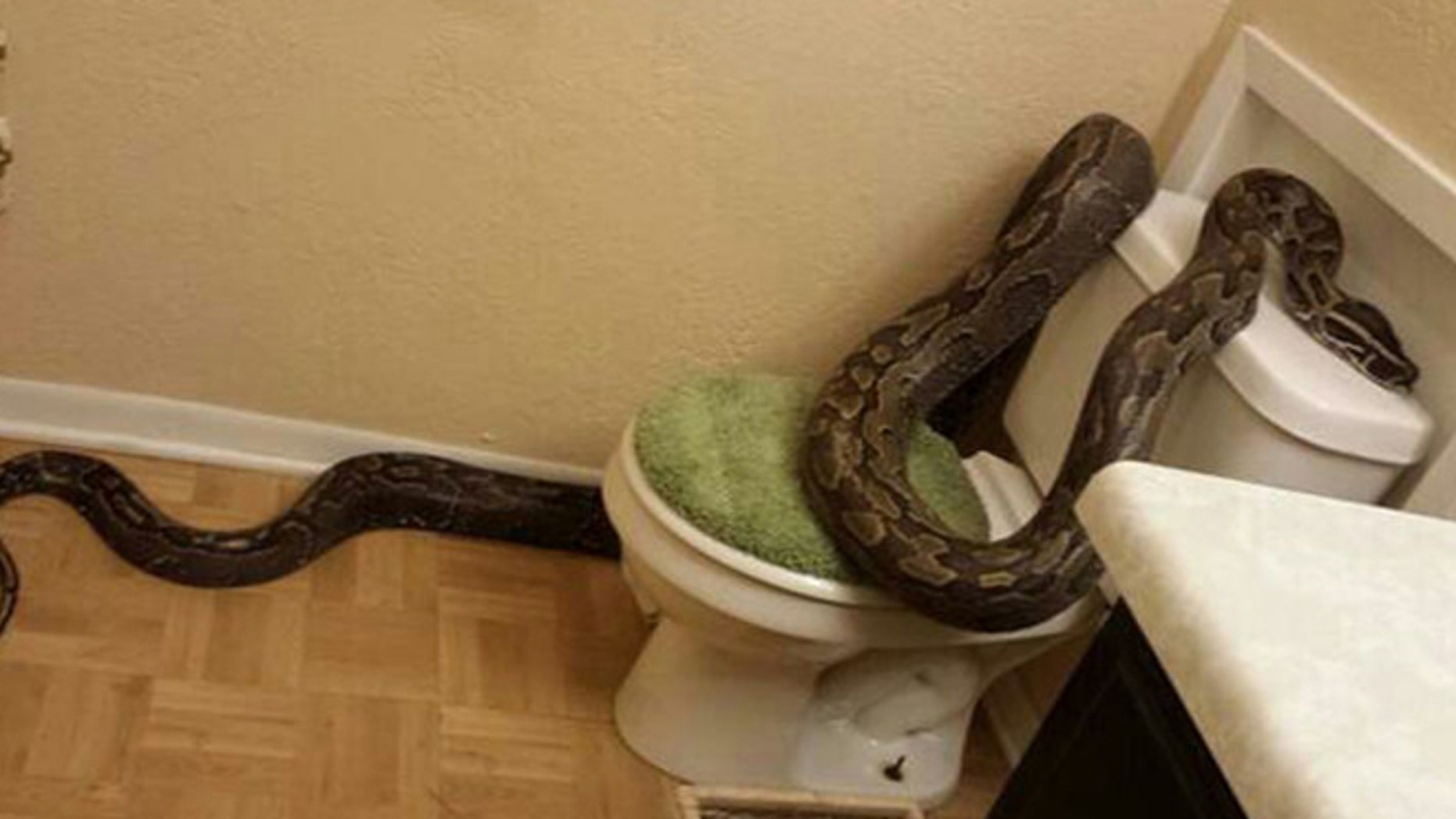 A 12-foot python has been returned to its owner after a slithery stop at a Central Texas home where a woman earlier bathed her pet guinea pigs.