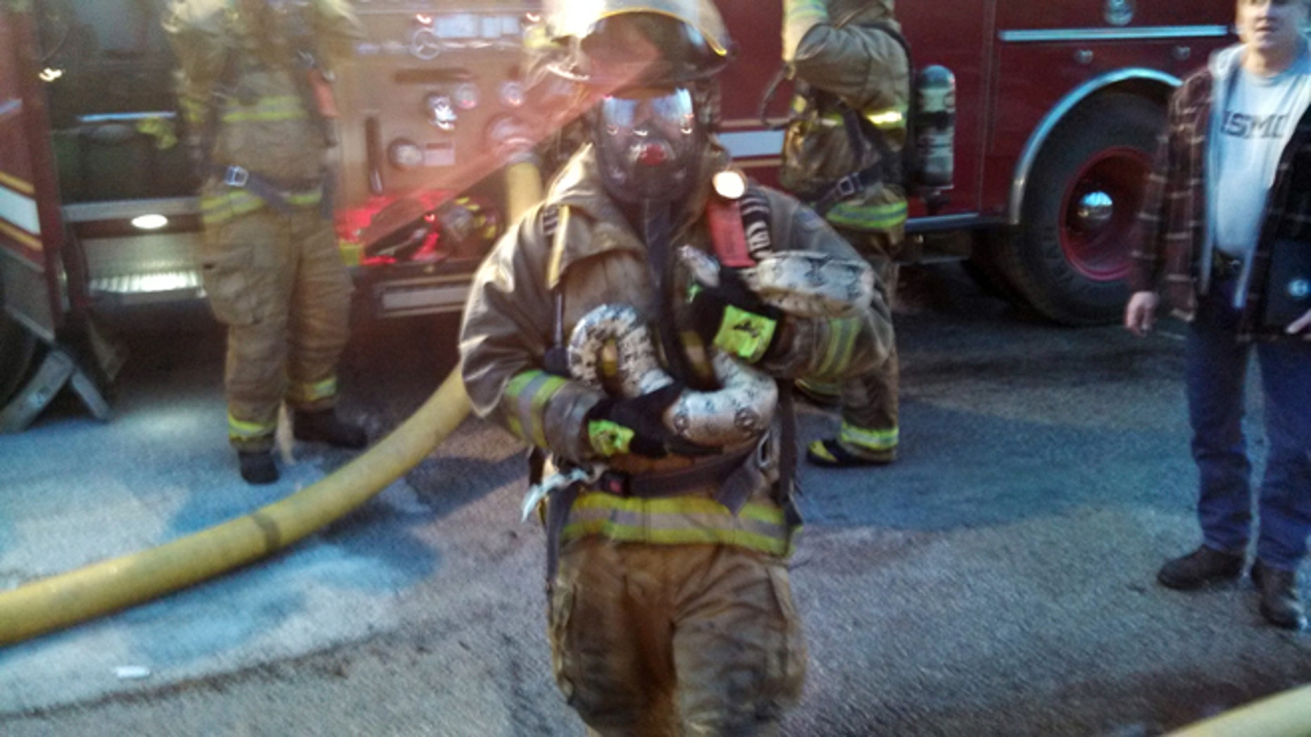 March 30, 2014: This photo provided by Gordon Cole, firefighter Scott Hemmelsbach holds a python after rescuing it from a burning home in Muskegon, Mich.