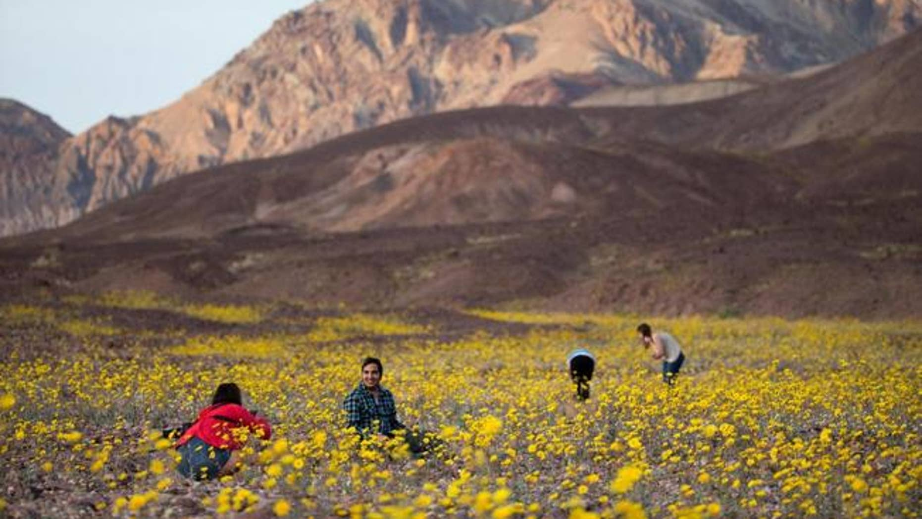 Tourists take turn snapping pictures of wildflowers near Badwater Basin in Death Valley, Calif.